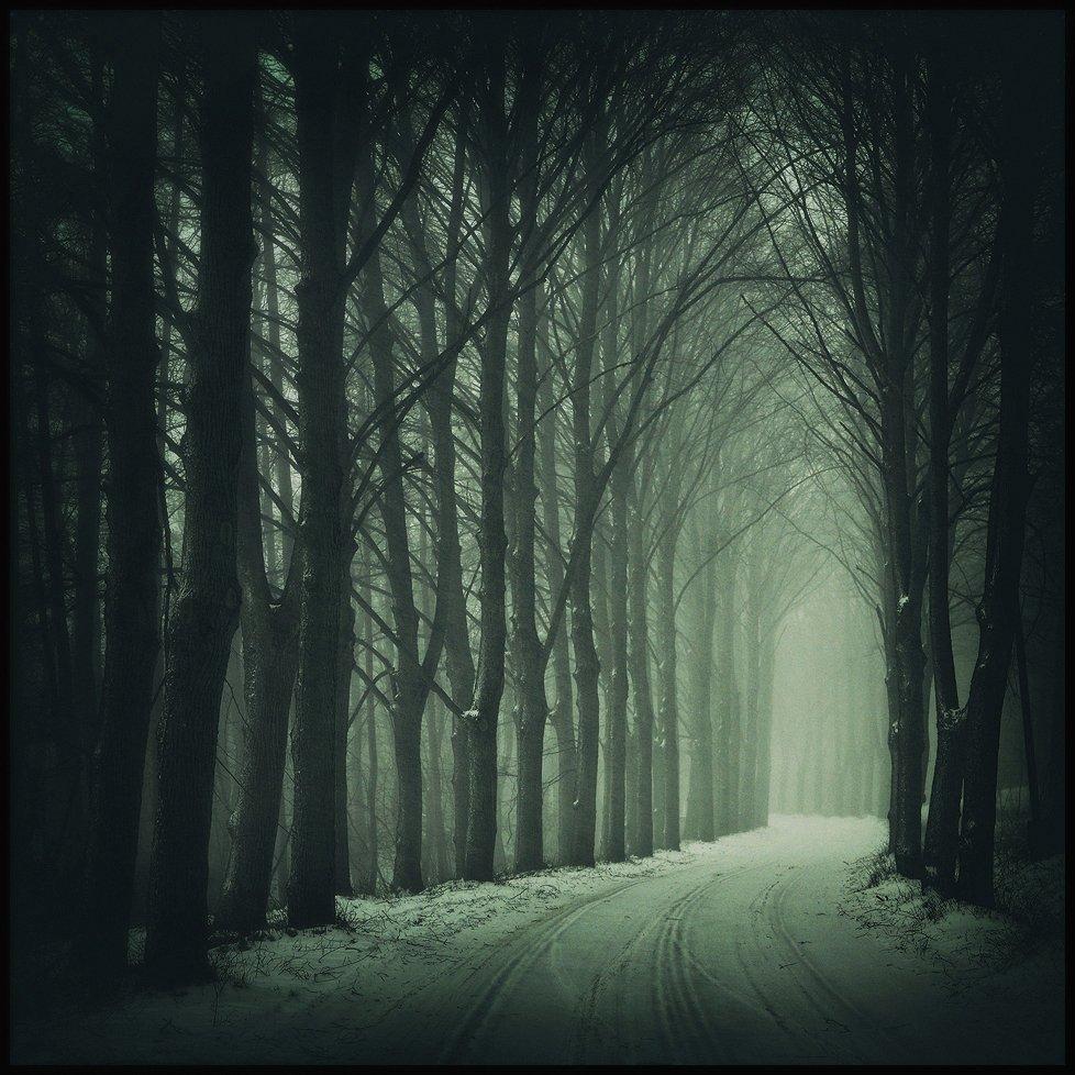 зимней бездне winter foggy road snow trees mist dark, Radoslaw Dranikowski