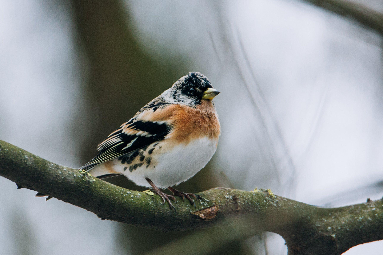 птица, фауна, природа, Цветков Сергей
