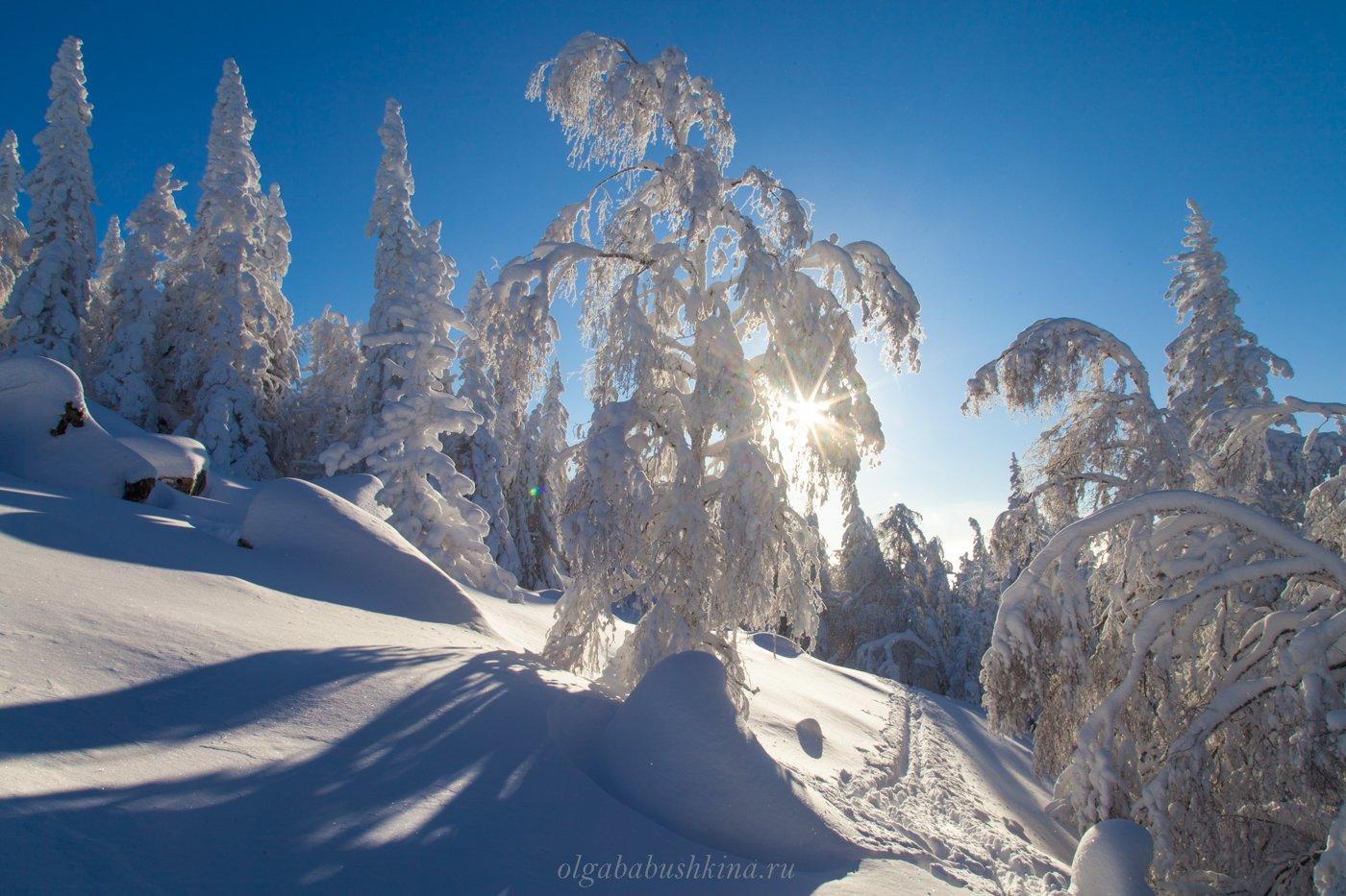 зима, мороз, солнце, Ольга Бабушкина