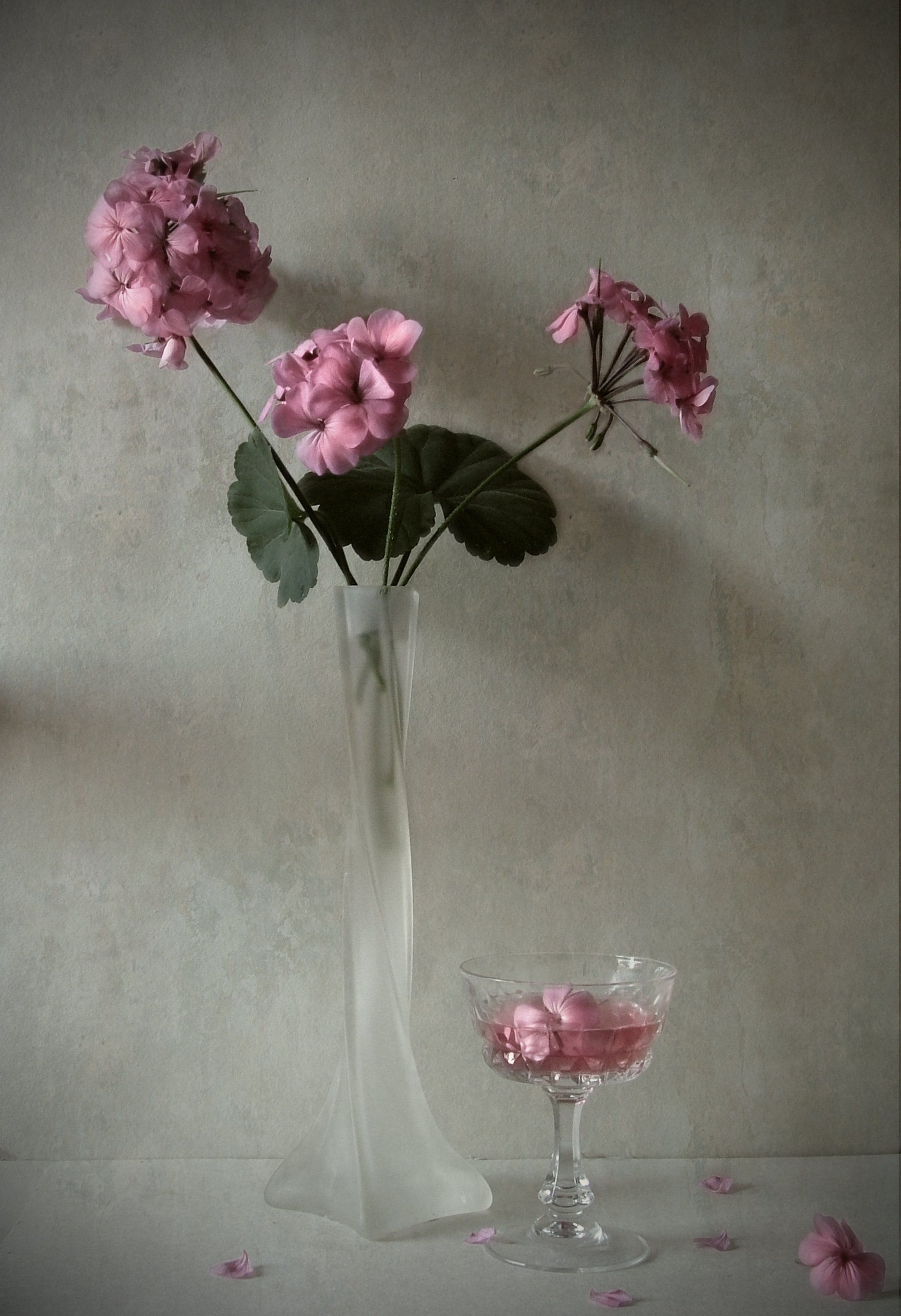 Geranium, wine, vase, flowers, Andrei Blank