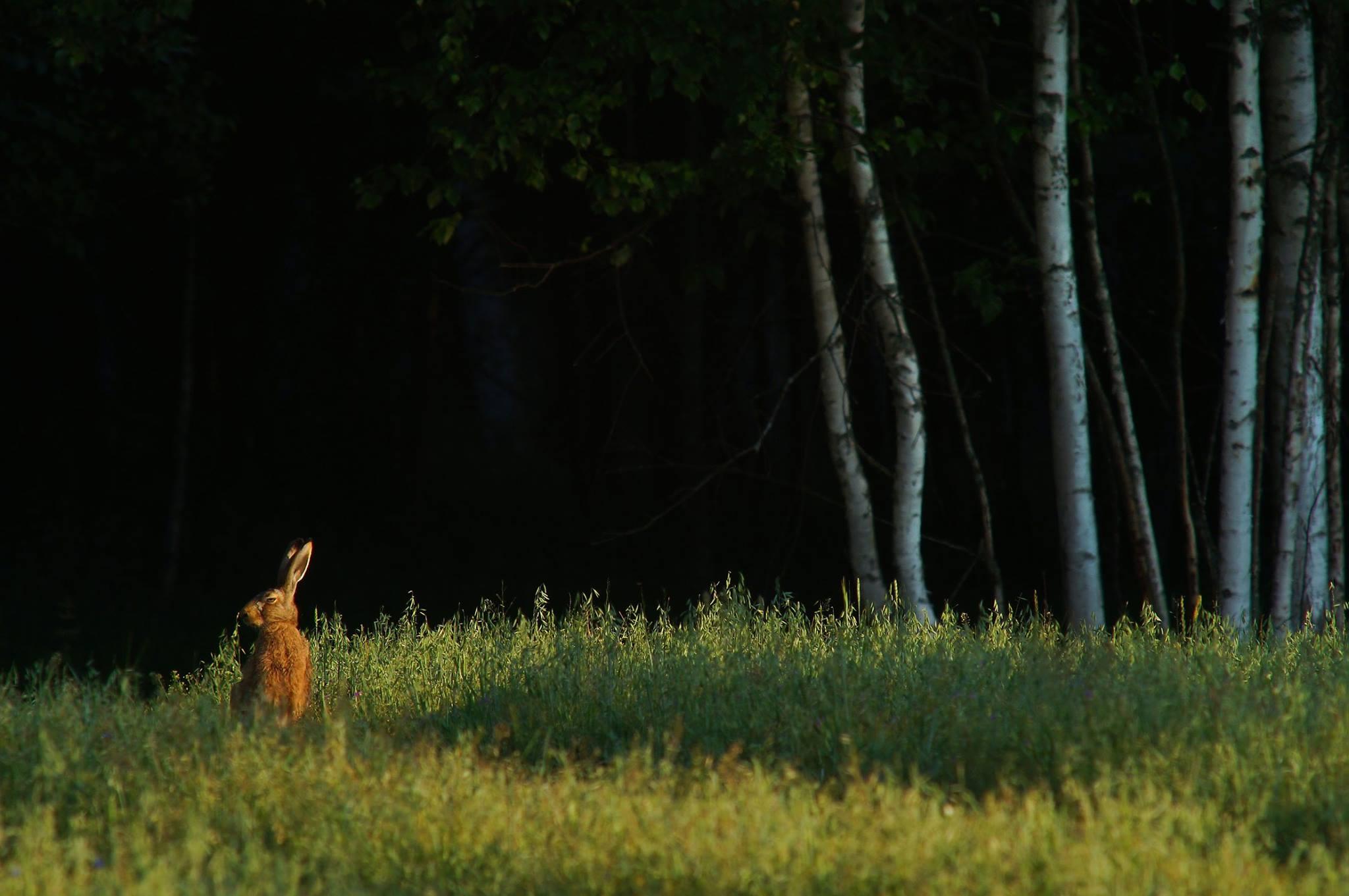 Заяц.Лес., Илья Бышнёв