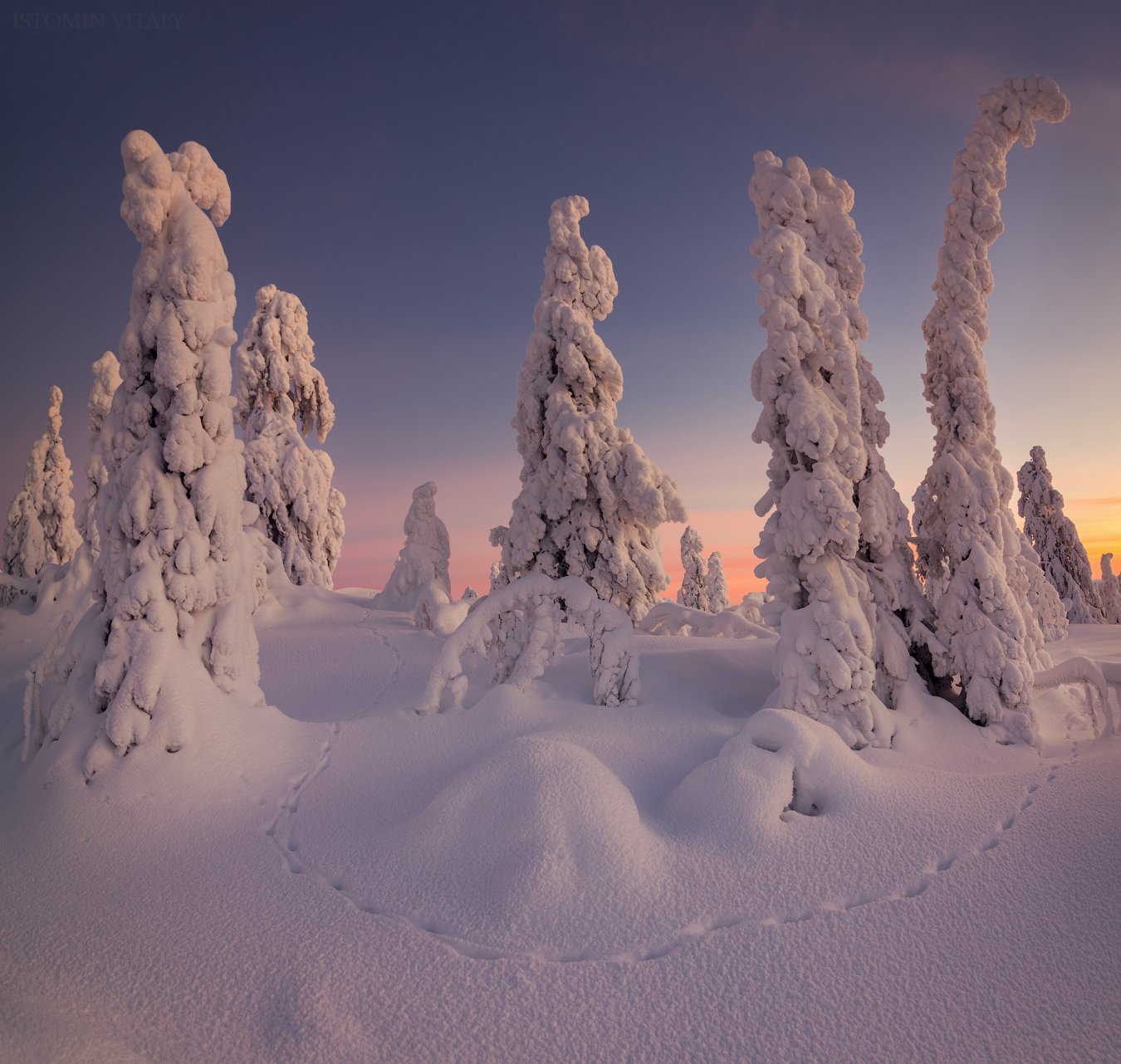 пейзаж,кандалакша,зима,снег,следы,лес,закат,небо,красиво,панорама,колський север, Истомин Виталий