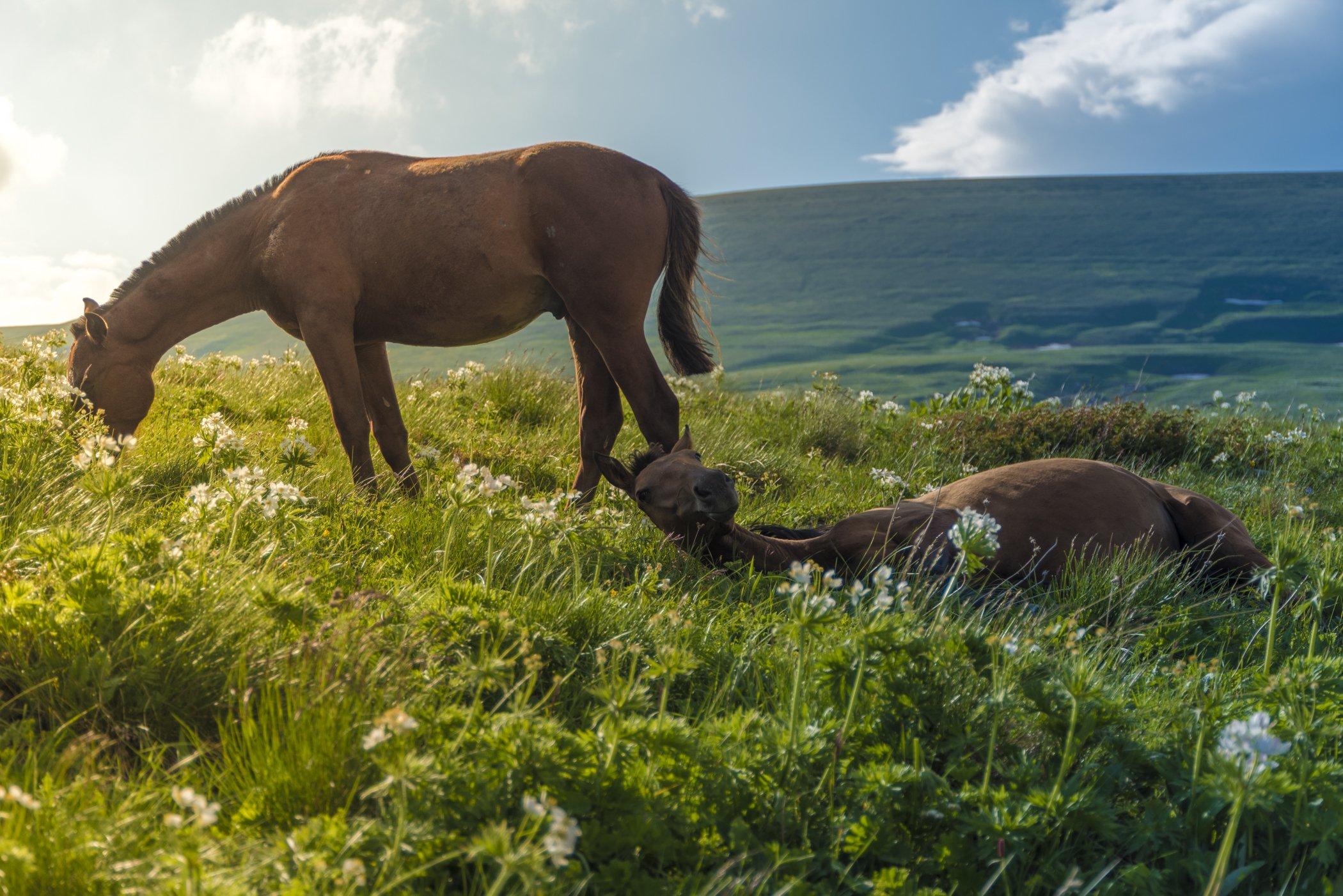 кони, кавказ, горы, природа, пейзаж, животные, рассвет, закат, фототур, Сергей Лексин