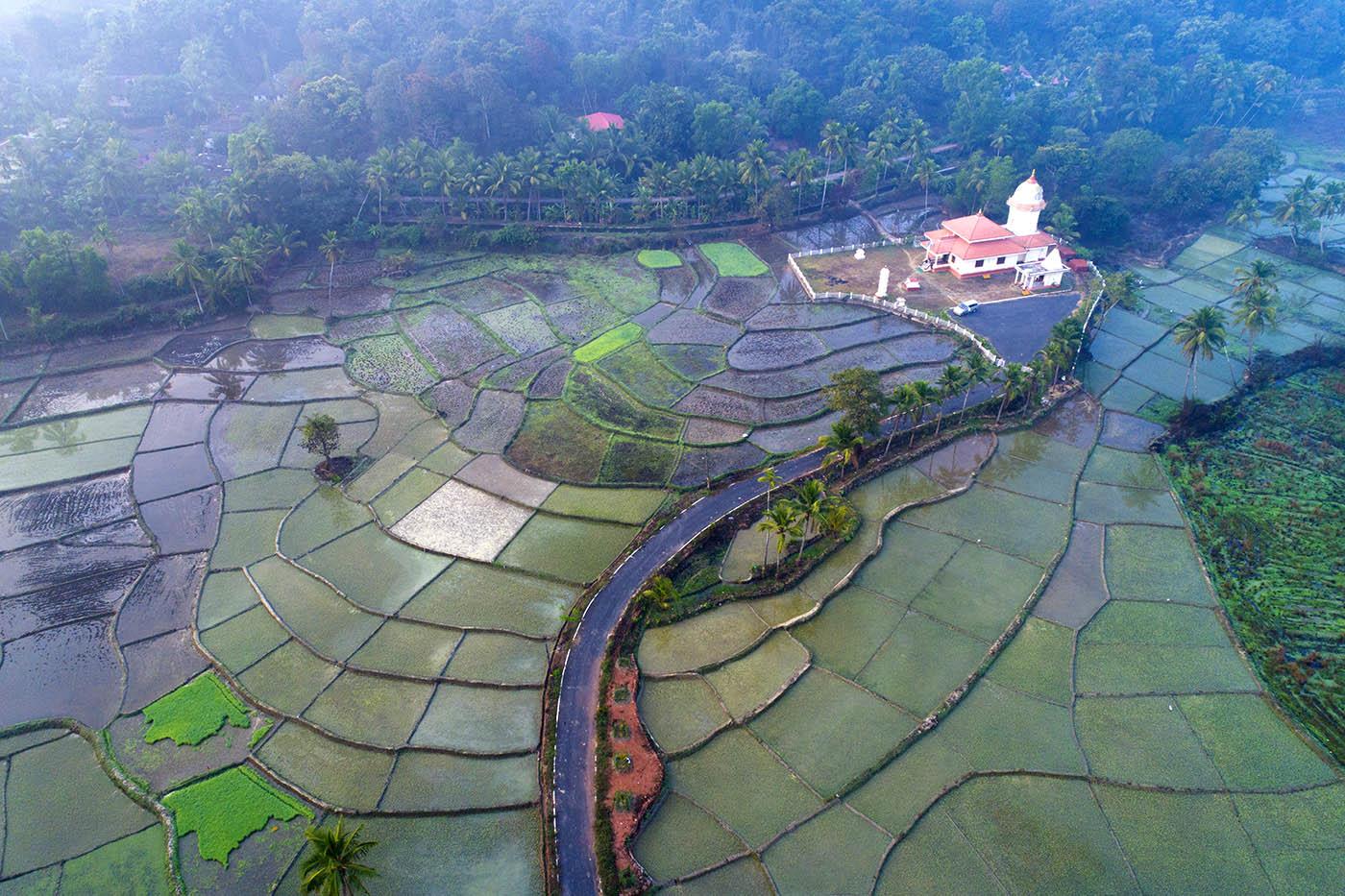 Индия, Гоа, рисовые поля, дрон, aerial, Борис Резванцев