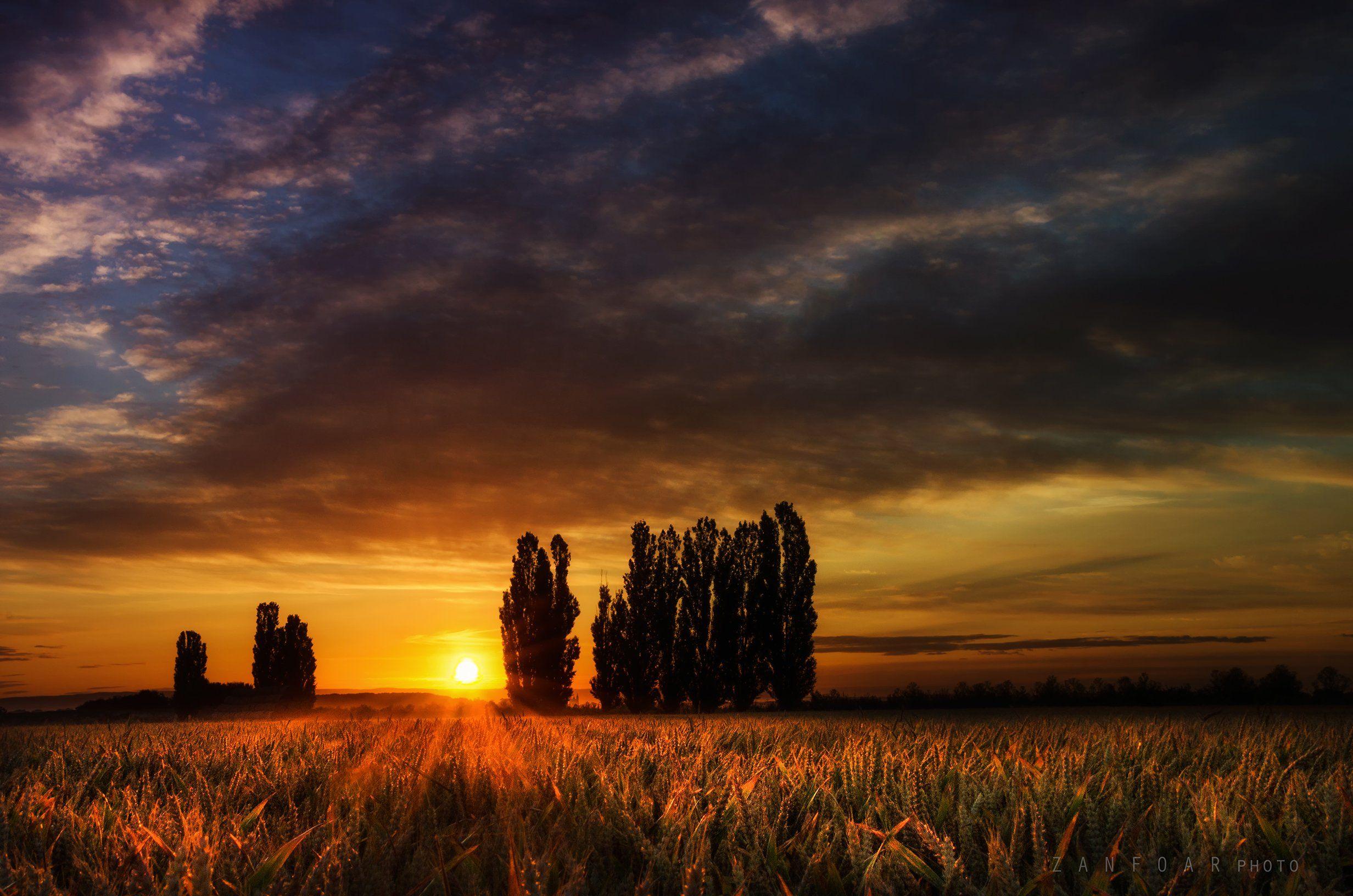 тополя, пейзаж, поле, природа, рассвет, зерно, лето, лучи, деревья, уши, zanfoar, чешская республика, nikon d7000, Zanfoar