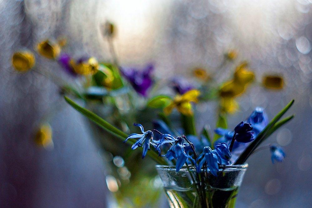 весна,этюд,взгляд,макро,цветы,первоцветы,гелиос,боке,, Марина Соколова