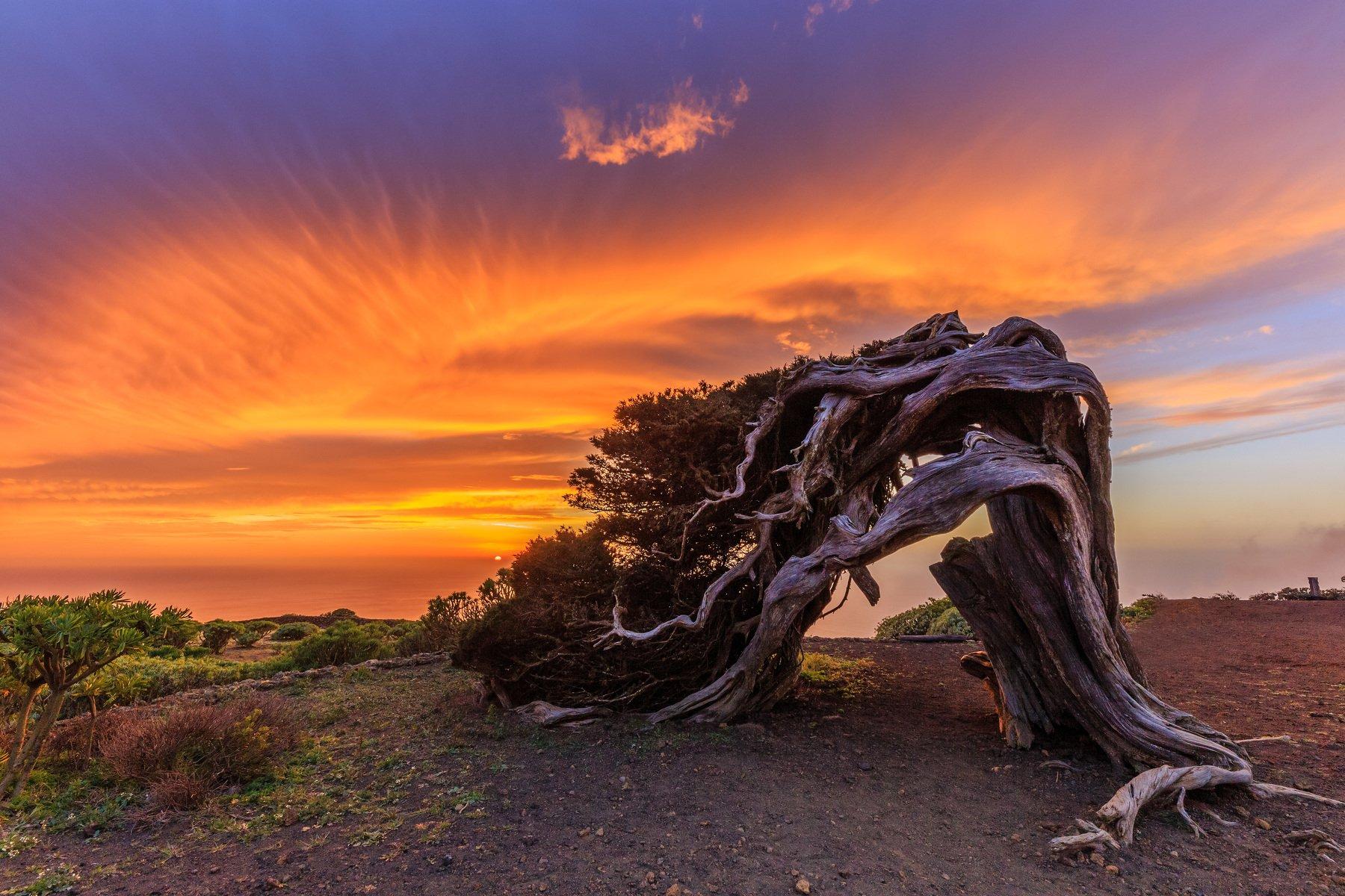 el hierro, el sabinar tree, canary island, sunset, Vitalis Vasylius