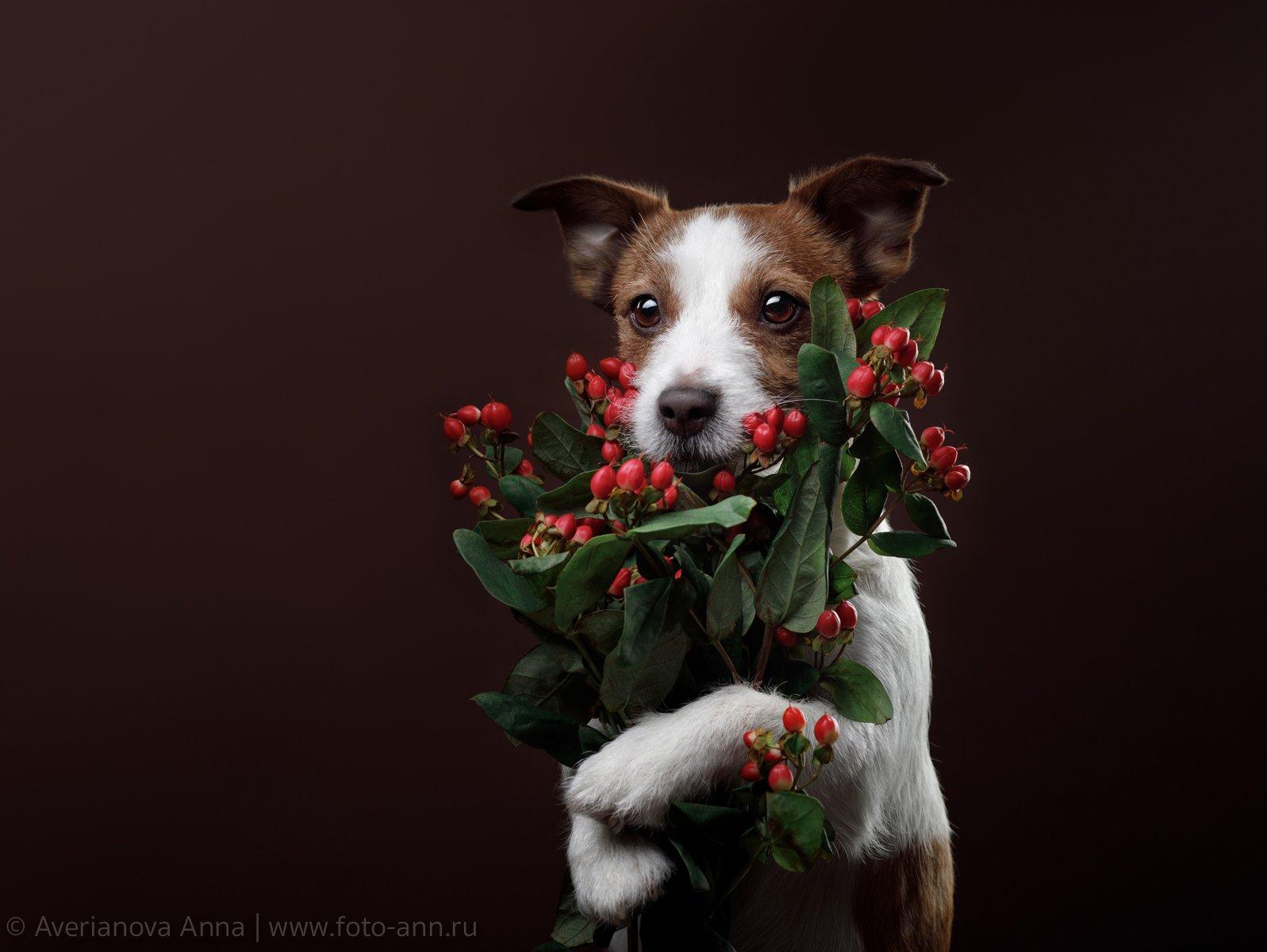 собака, цветы, Анна Аверьянова