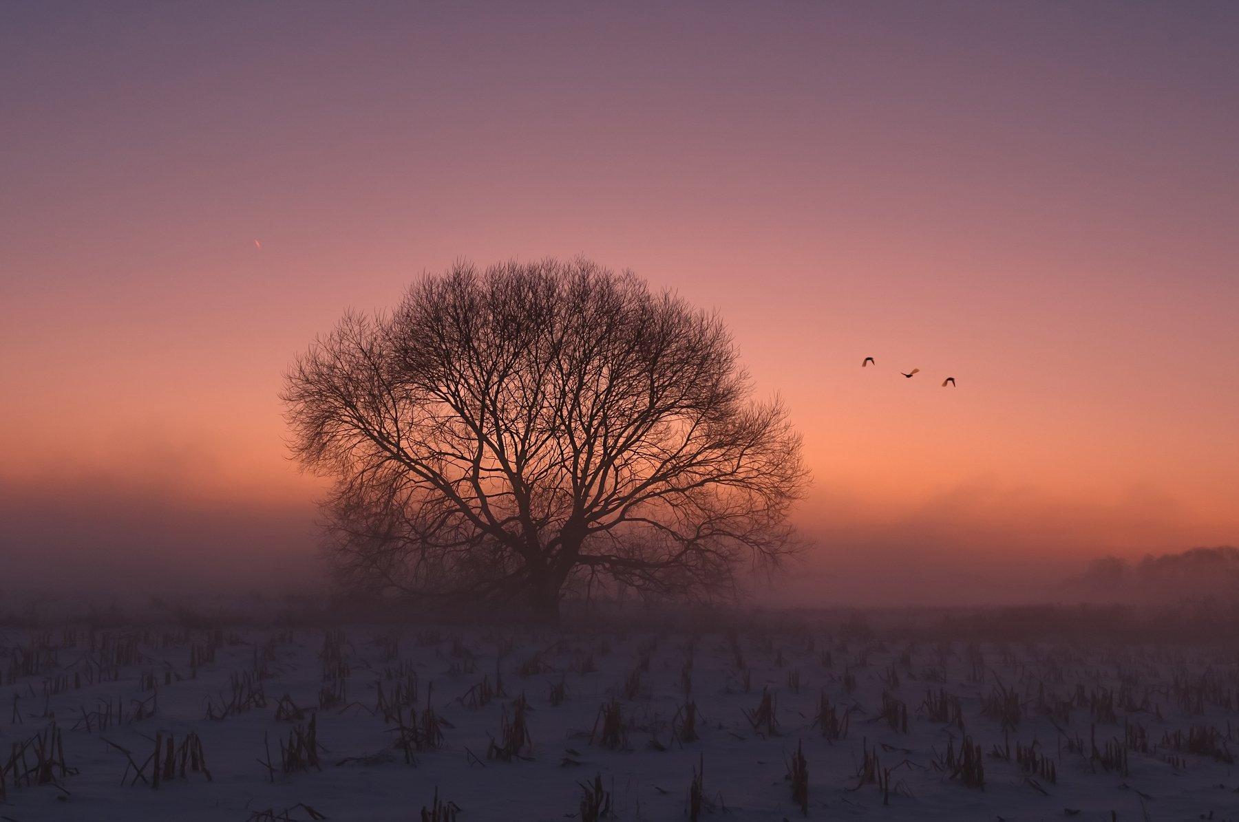зима, закат, свислочь, беларусь, туман, Александр Гвоздь