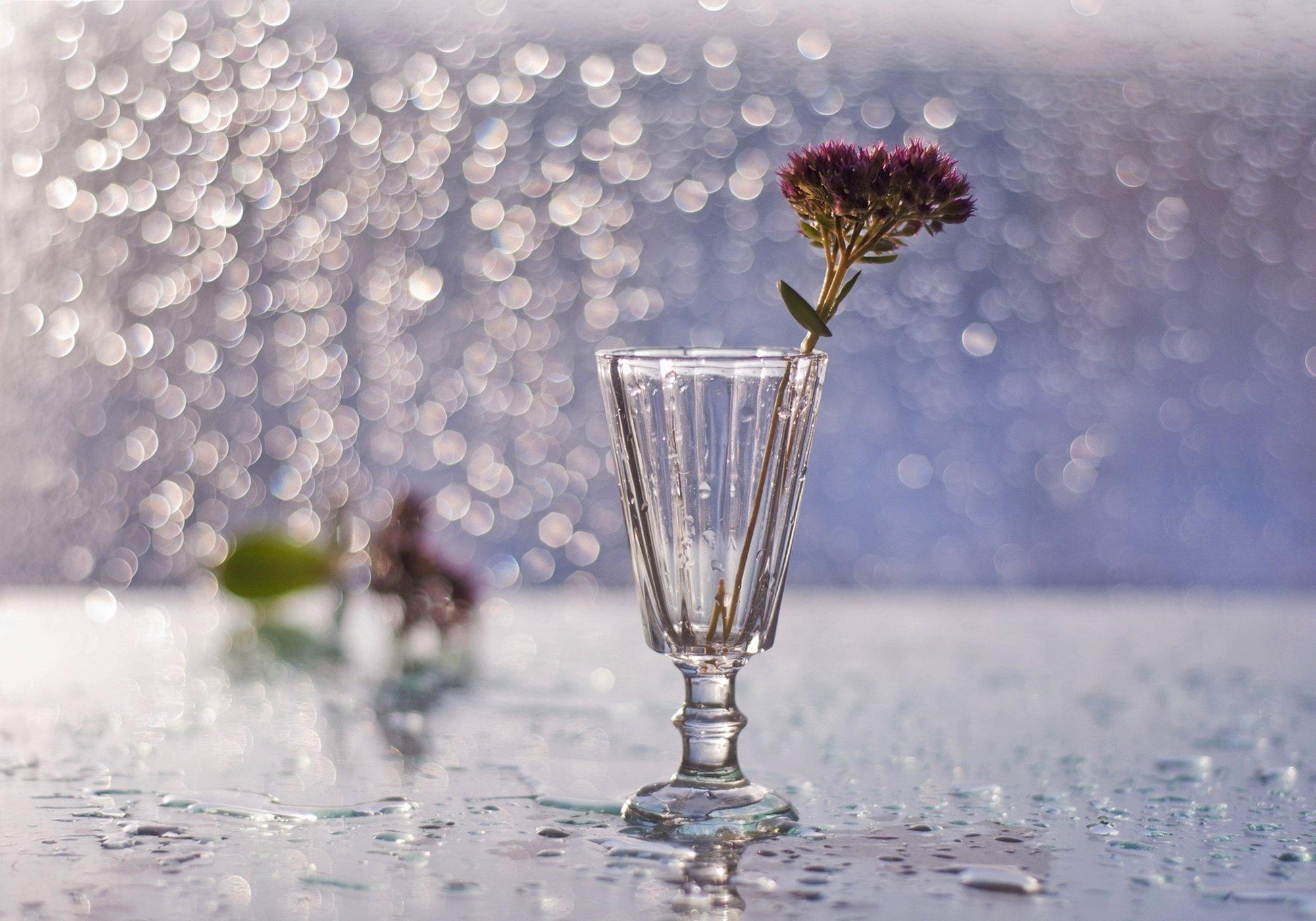 натюрморт,цветы,боке, Наталия