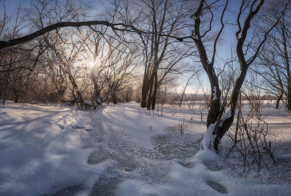 зима природа снег солнце деревья, Корнилов Михаил