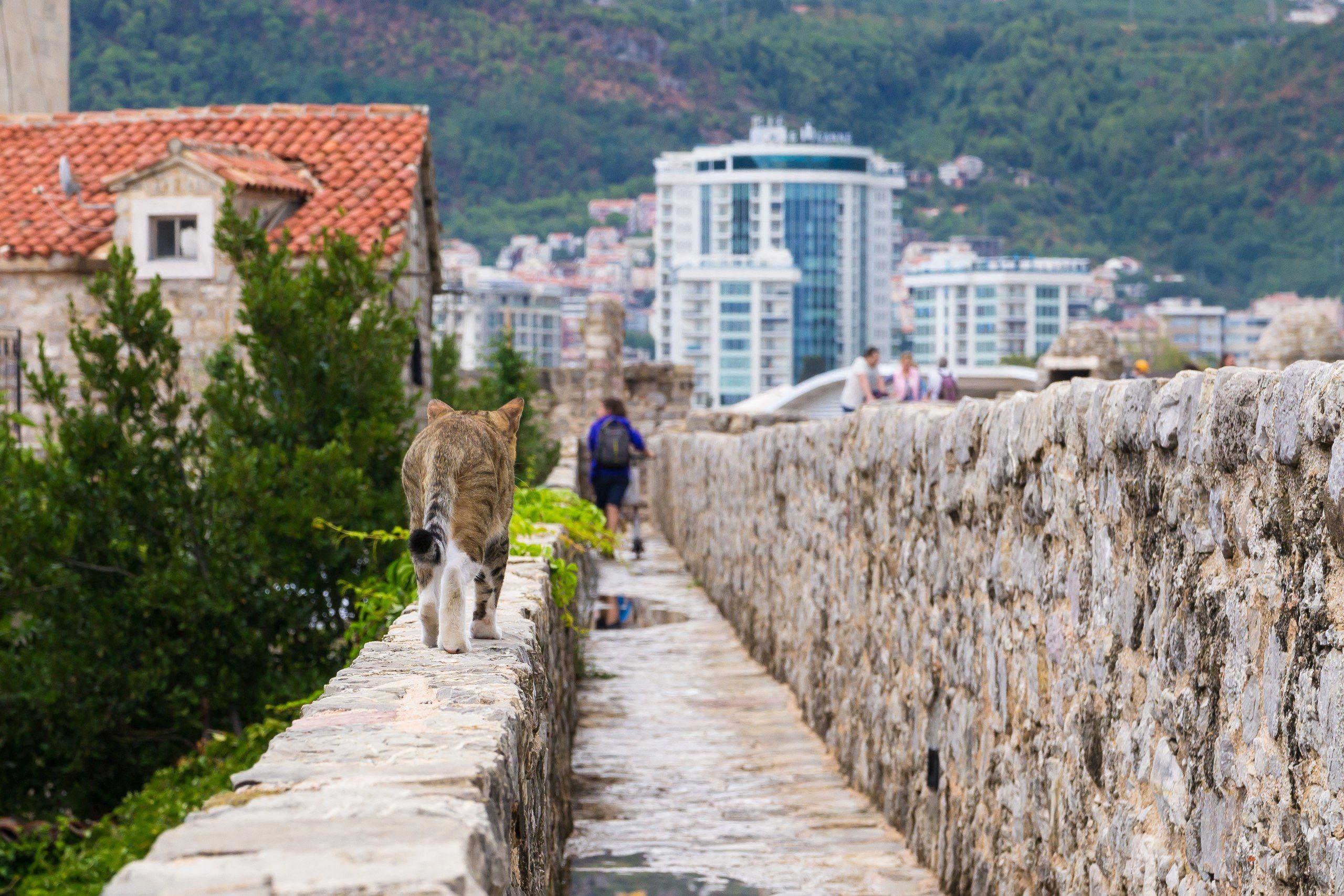 кот, коты, черногория, море, горы, путишествие, история, животные, montenegro, budva, cat, cats, animals, Мержанов Дима
