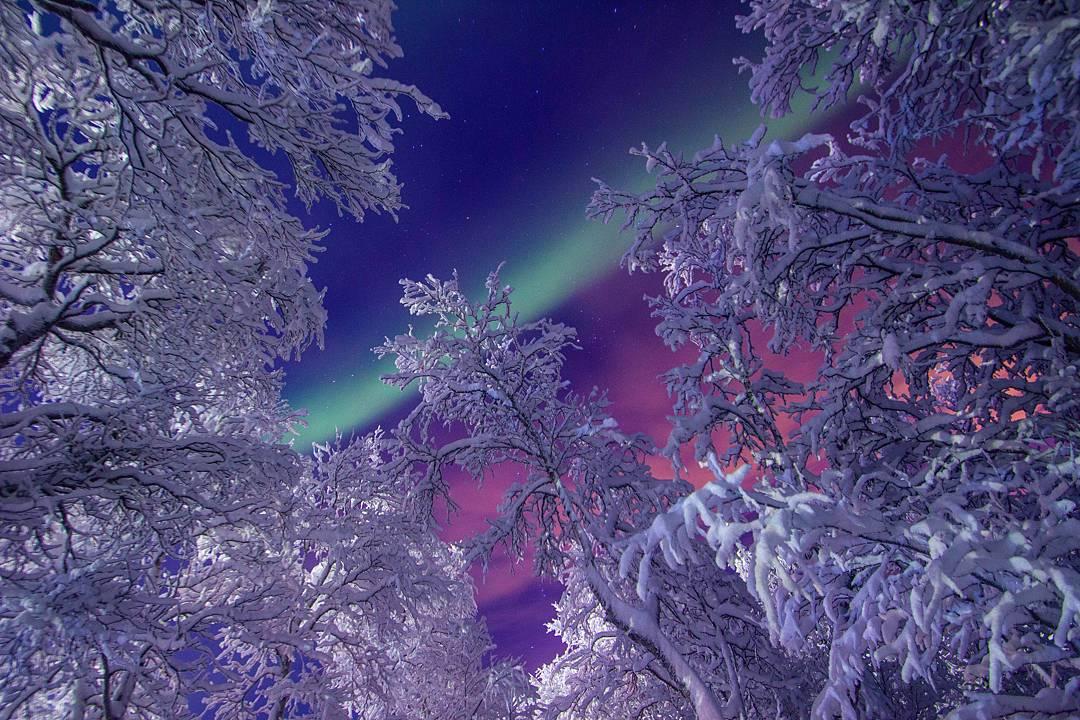 северное сияние, мороз, пейзаж, снег, иней, деревья, север, зима, небо, Салтыкова Алёна