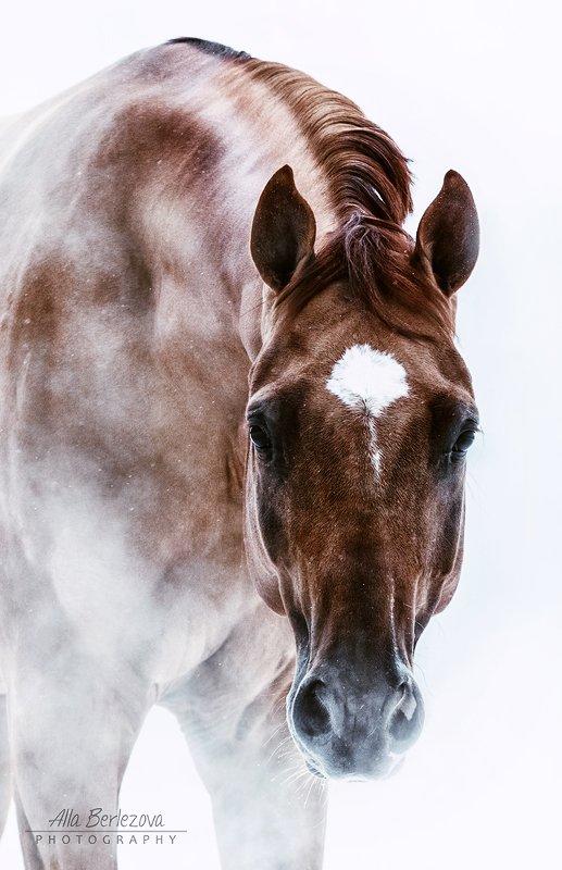 лошадь, портрет, horse, portrait, Alla