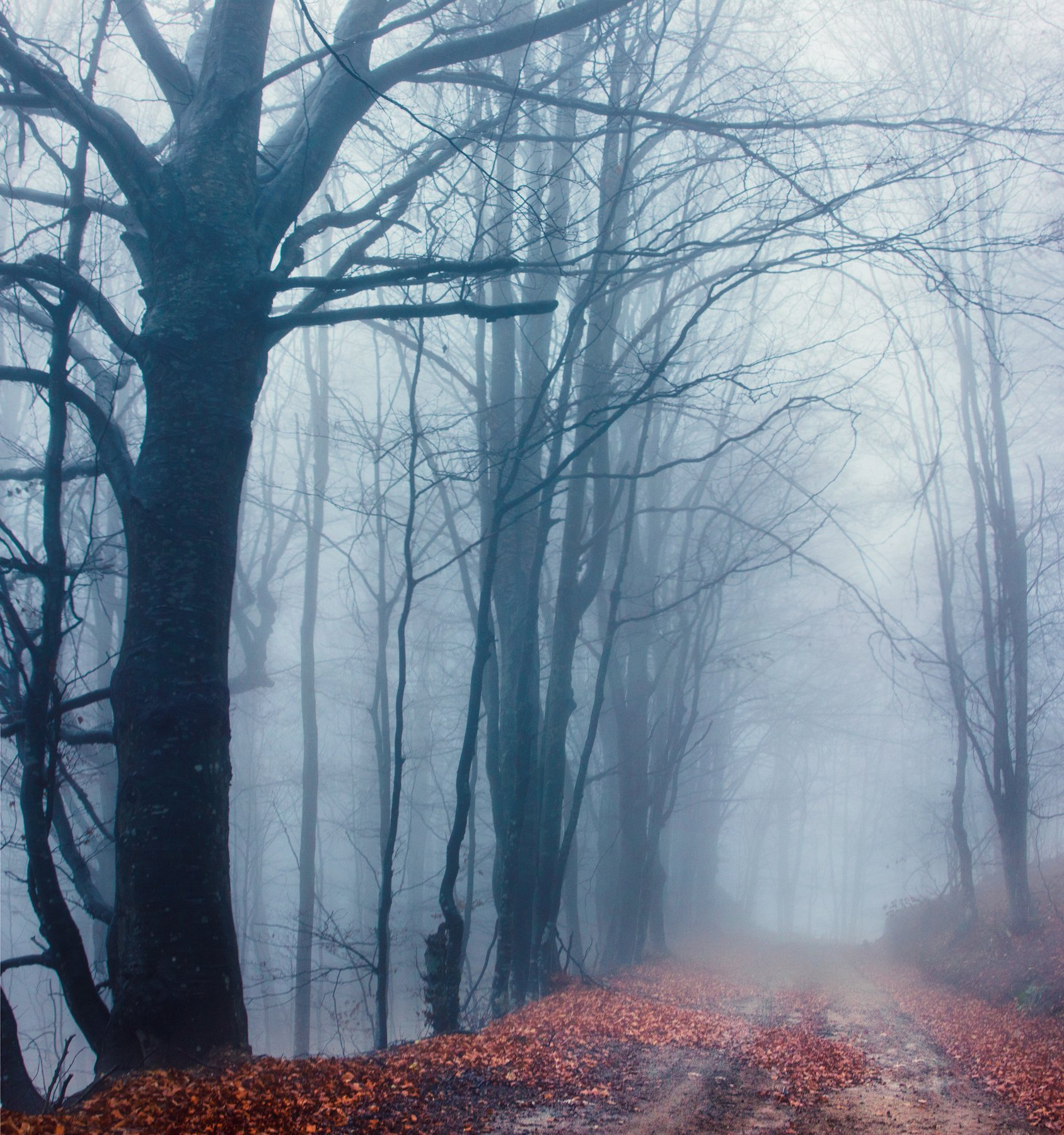 природа, горная дорога, бук, лес, дерево, осень, мокрый, дождливый, туманный, сербия,nature, mountain road, beech, forest, tree, autumn, wet, rainy, foggy, serbia,, Марко Радовановић
