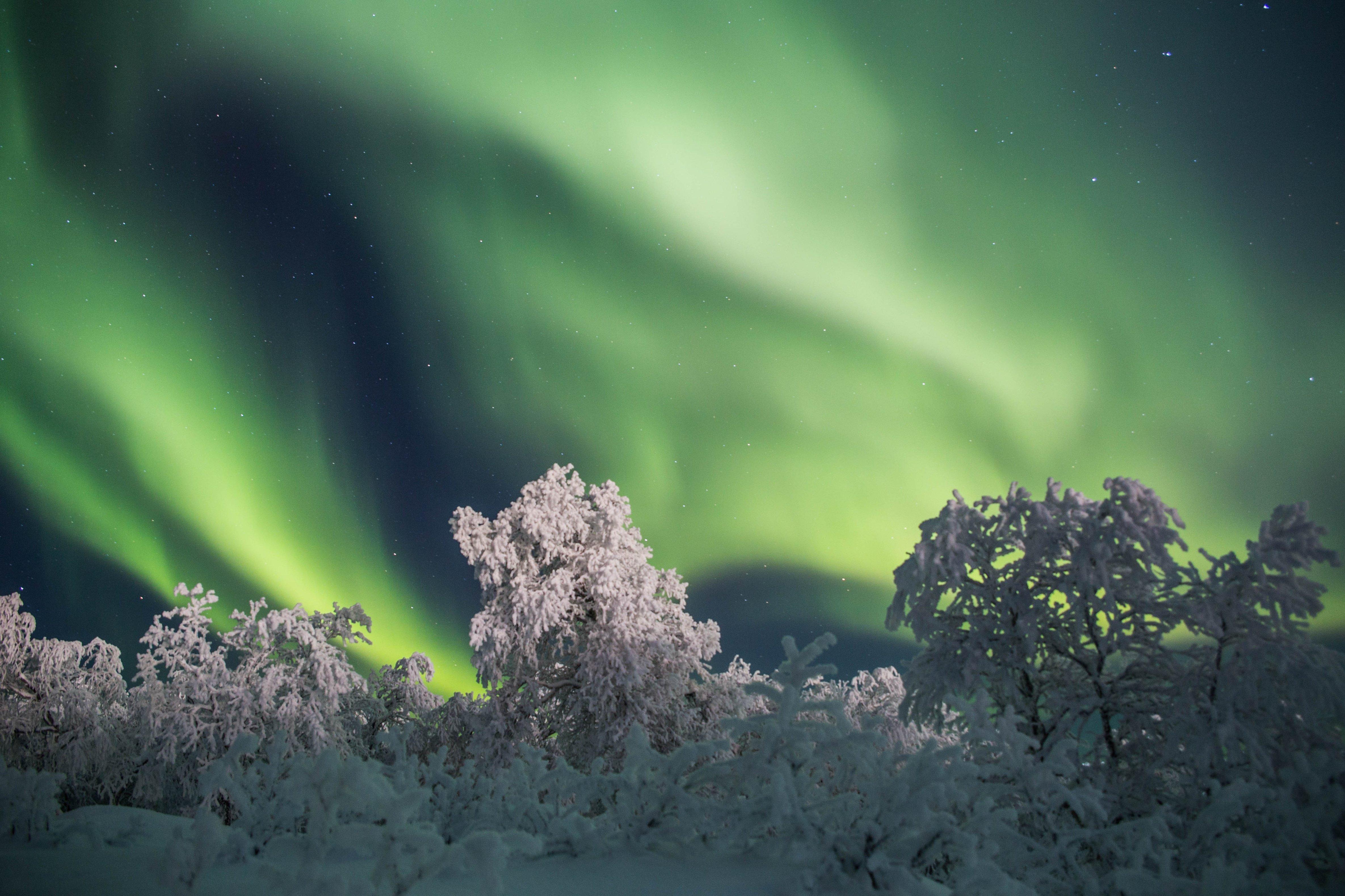 северное сияние, полярное сияние, мороз, деревья, снег, сугробы, север, пейзаж, природа, иней, ночь, кольский край, мурманская область, звёзды, Салтыкова Алёна