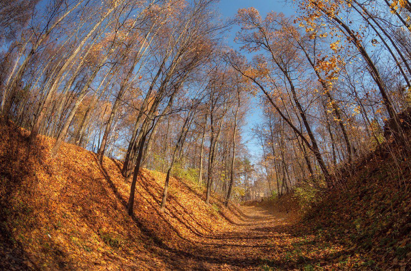 осень, солнце, листья, усадьба, суханово, Виктор Климкин