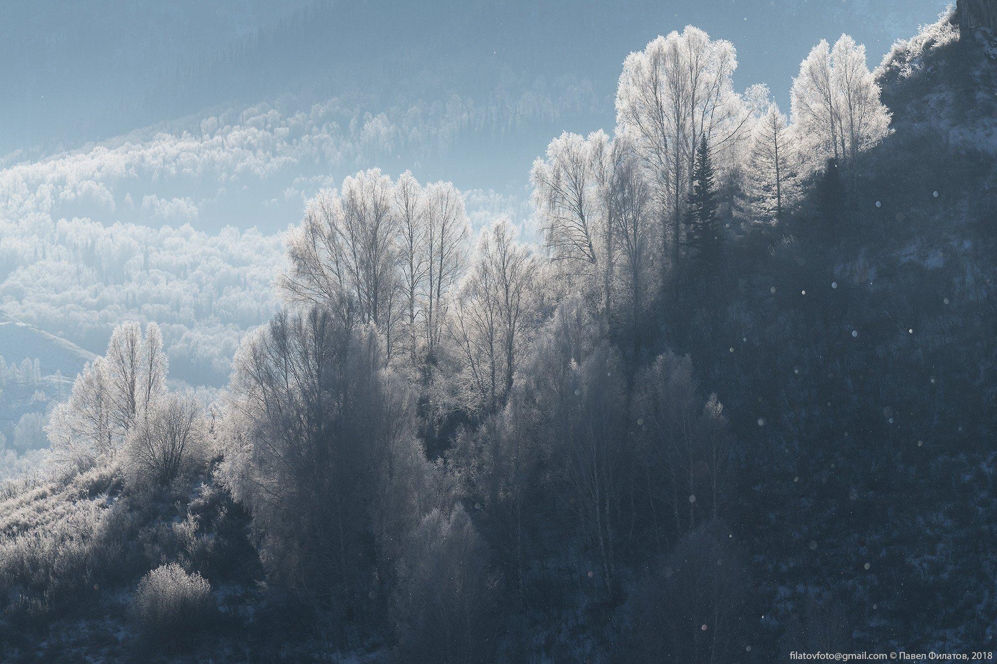 алтай, сибирь, тигирек, алтайский край, иней, березы, зима, Павел Филатов