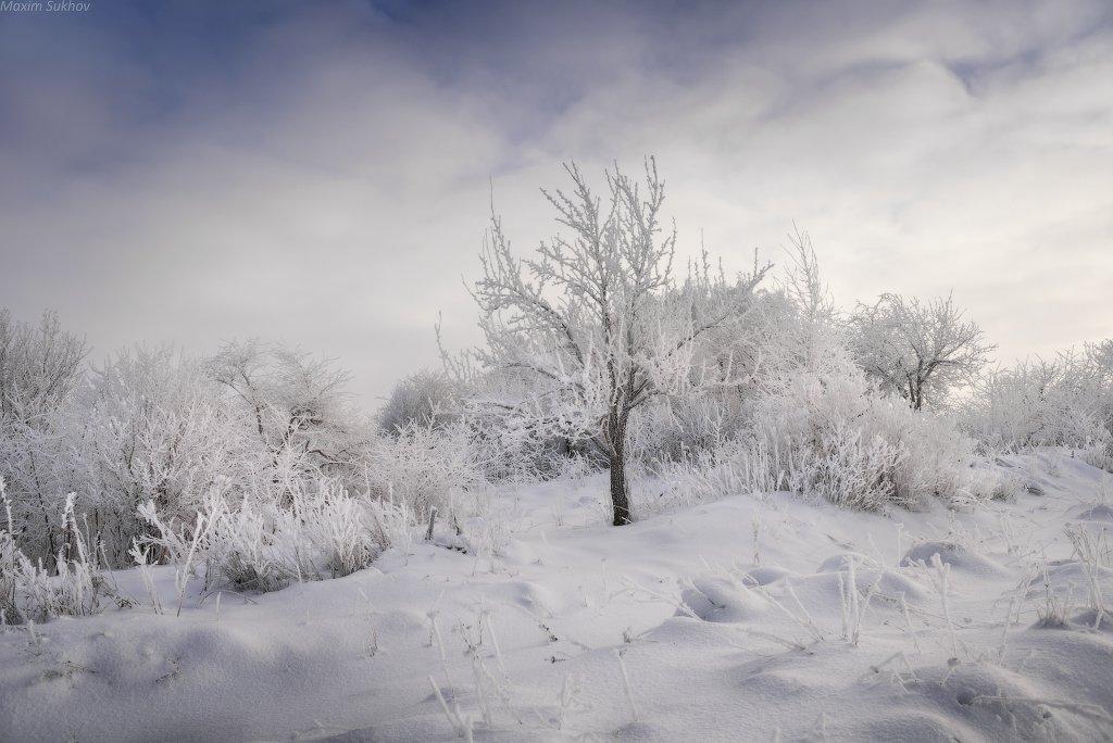 зима, снег, изморозь, холод, иней, дерево, кусты, мороз, вечер, вязники, Максим Сухов