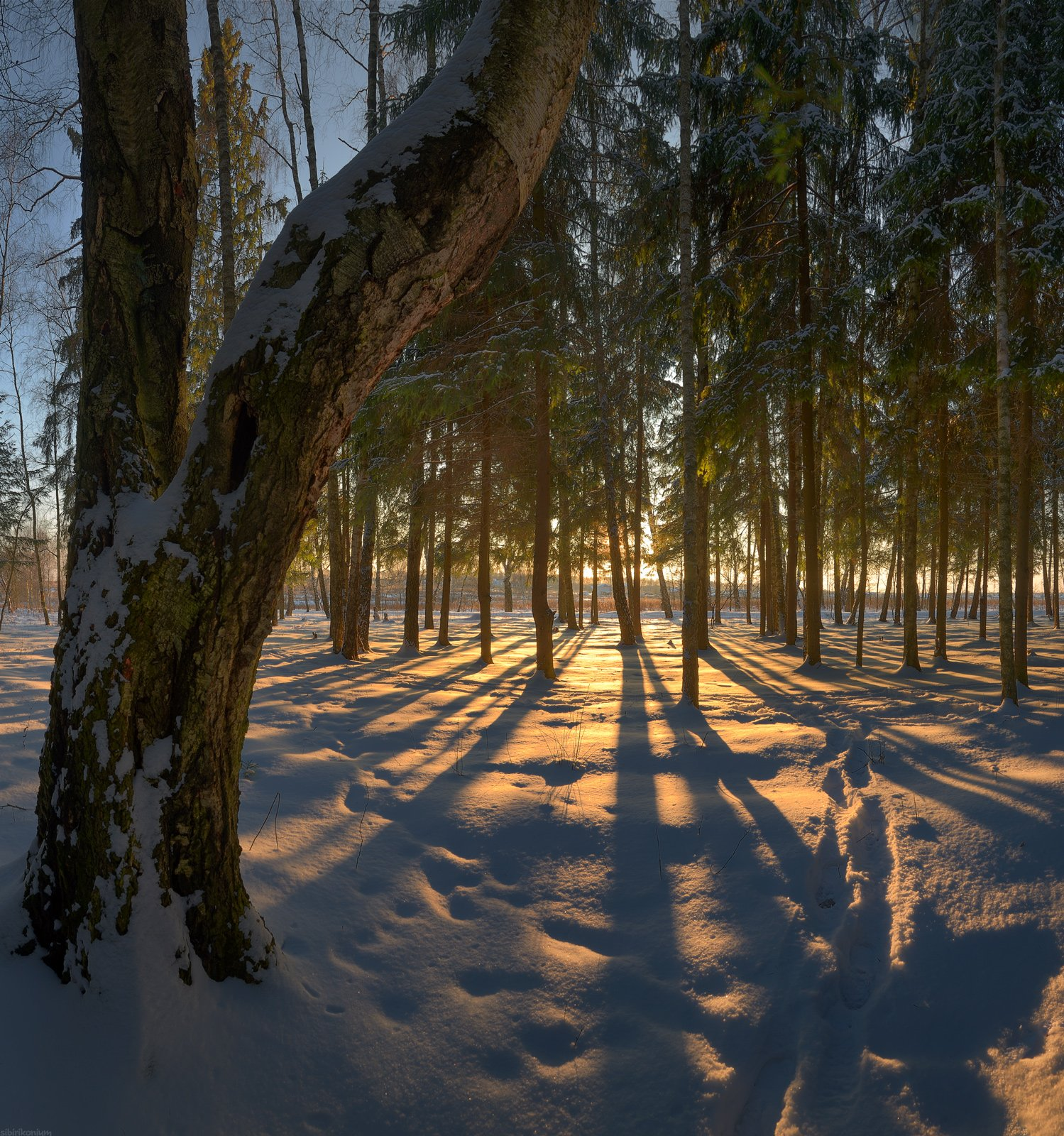 #снег #пейзаж #лес #подмосковье #дерево #закат #вечер #свет #чехов, Морозов Юрий
