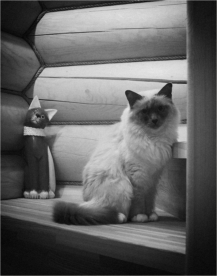 кошка, Куликова Ирина