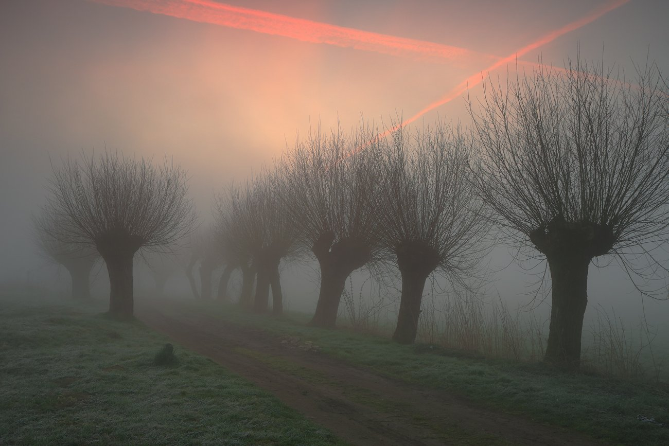 road, light, mist, willows, morning, sunrise, mood,, Jacek Lisiewicz