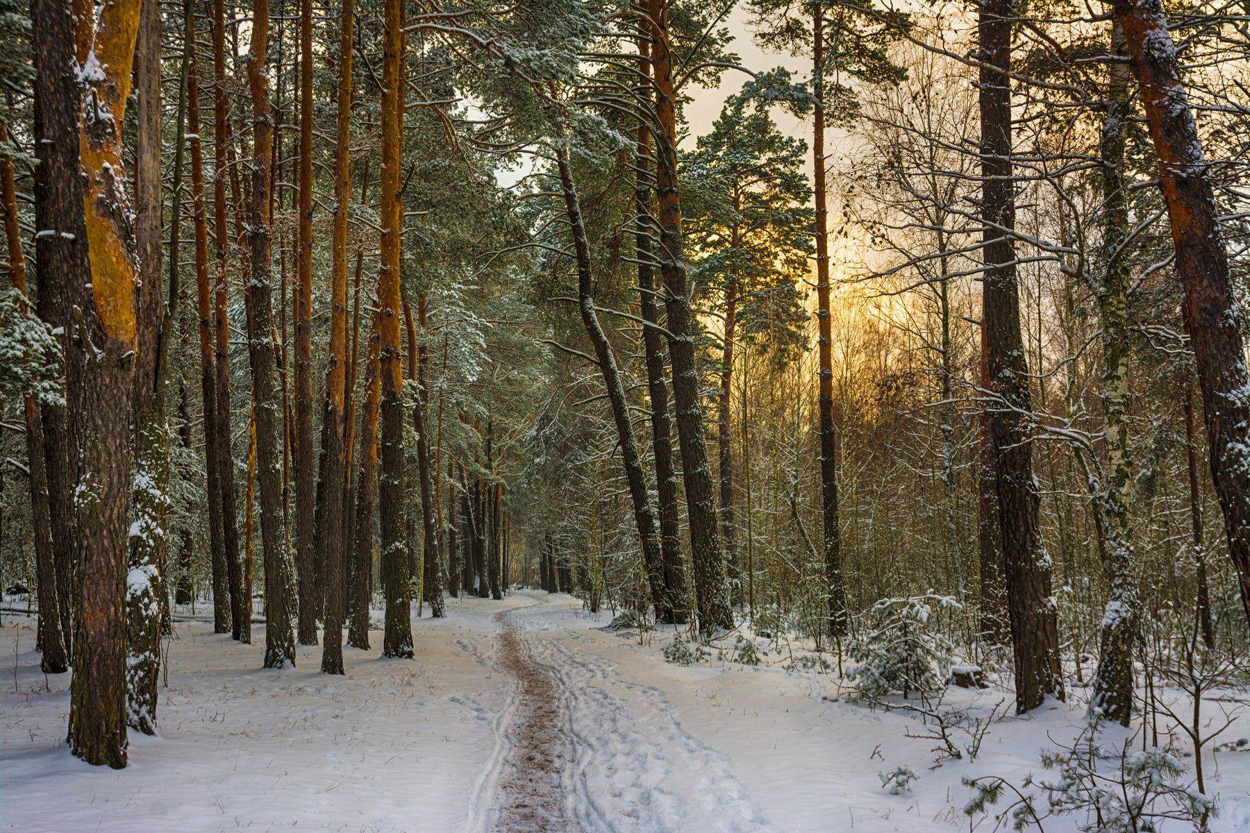 landscape, пейзаж,  лес,  деревья,  природа,   сосны, тропинка, прогулка, снег, зима, мороз, вечер, закат, Михаил MSH