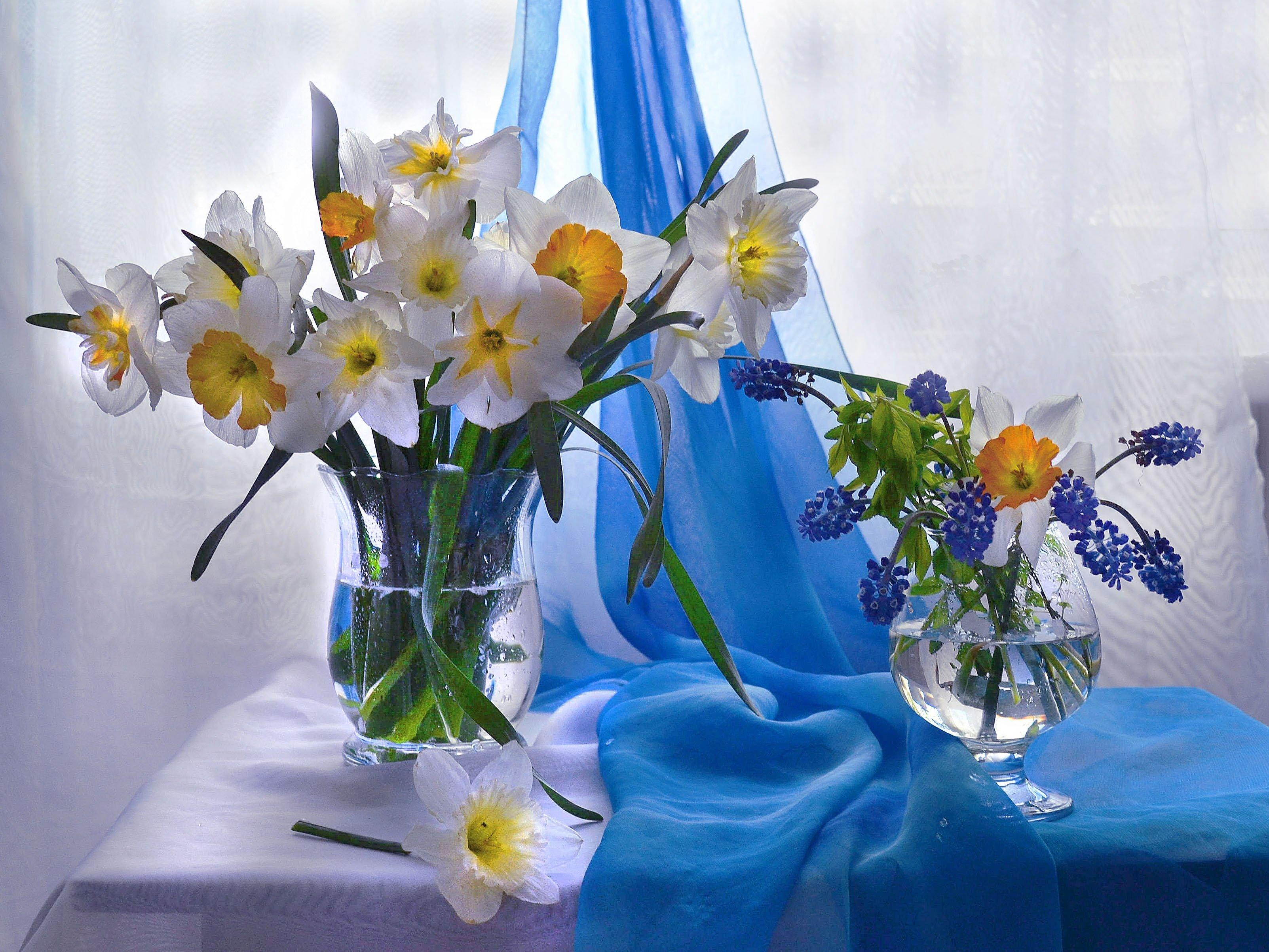 still life, натюрморт, весна, мускари, нарциссы, настроение., фото натюрморт, стихи, цветы, Колова Валентина