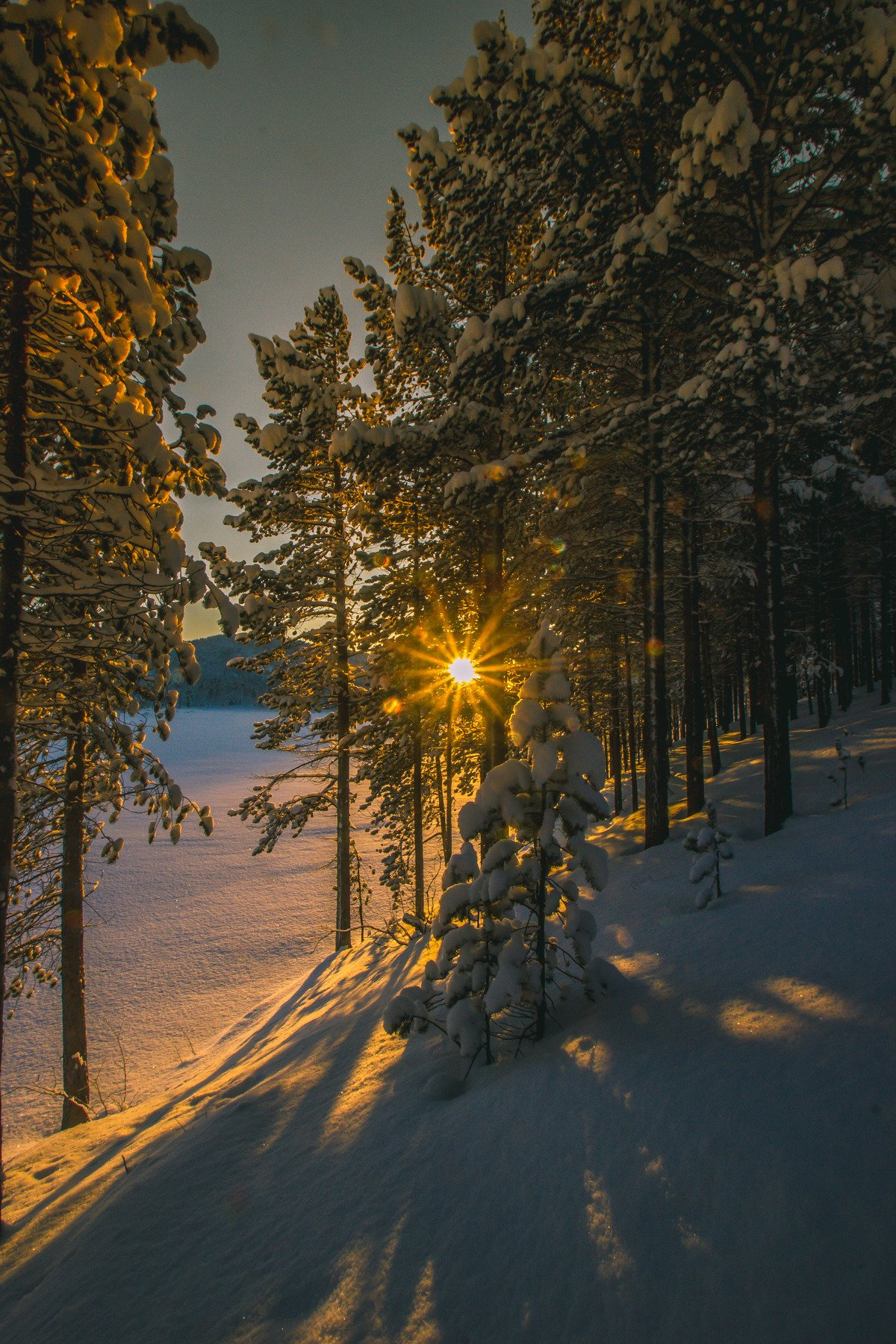 пейзаж, природа, закат, солнце, свет, лес, деревья, север, сугробы, снег, сосны, река, Салтыкова Алёна