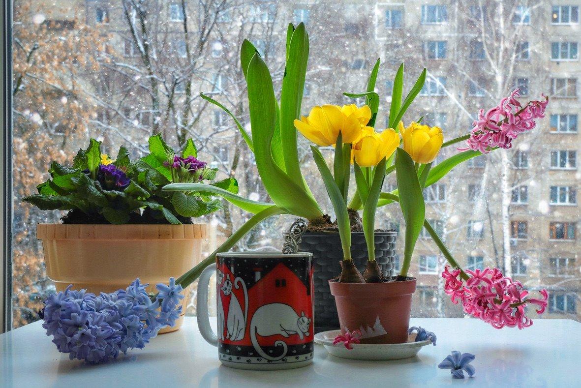 коты,цветы,натюрморт,весна,зима,, Zadorina Svetlana