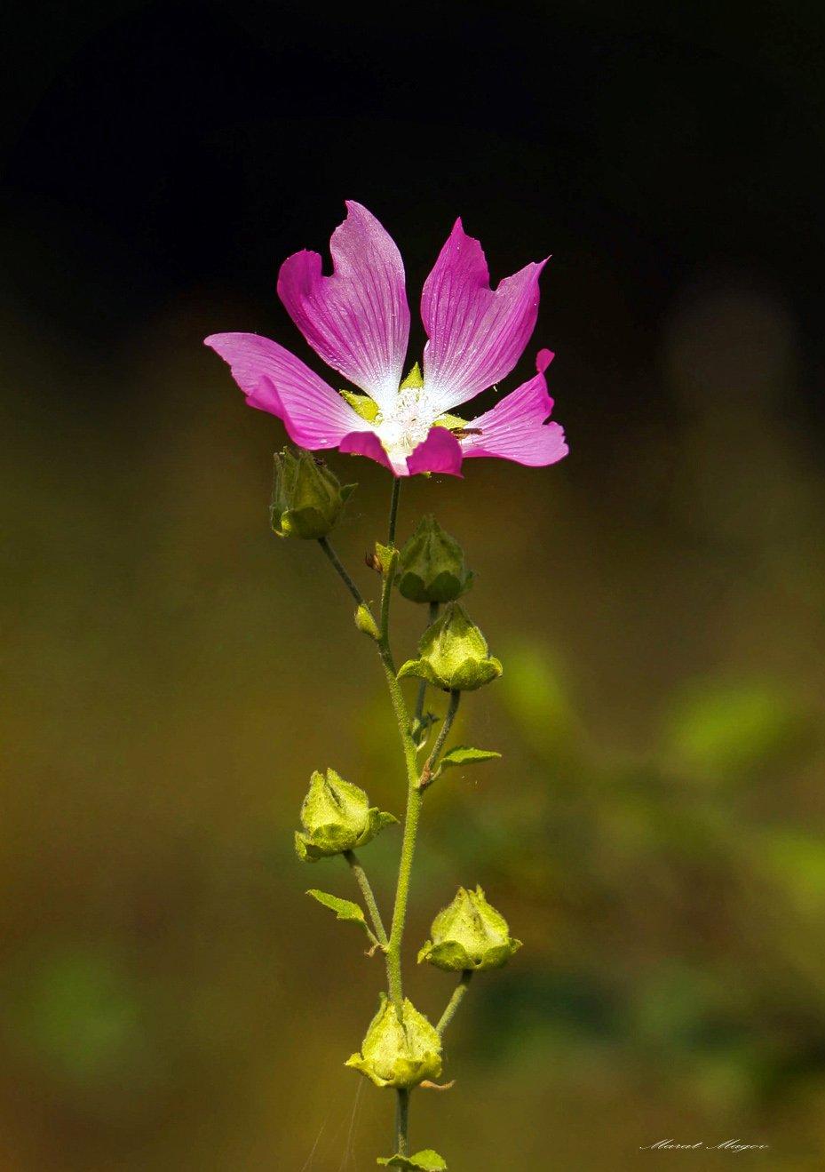 цветок,цветы,флора., Марат Магов