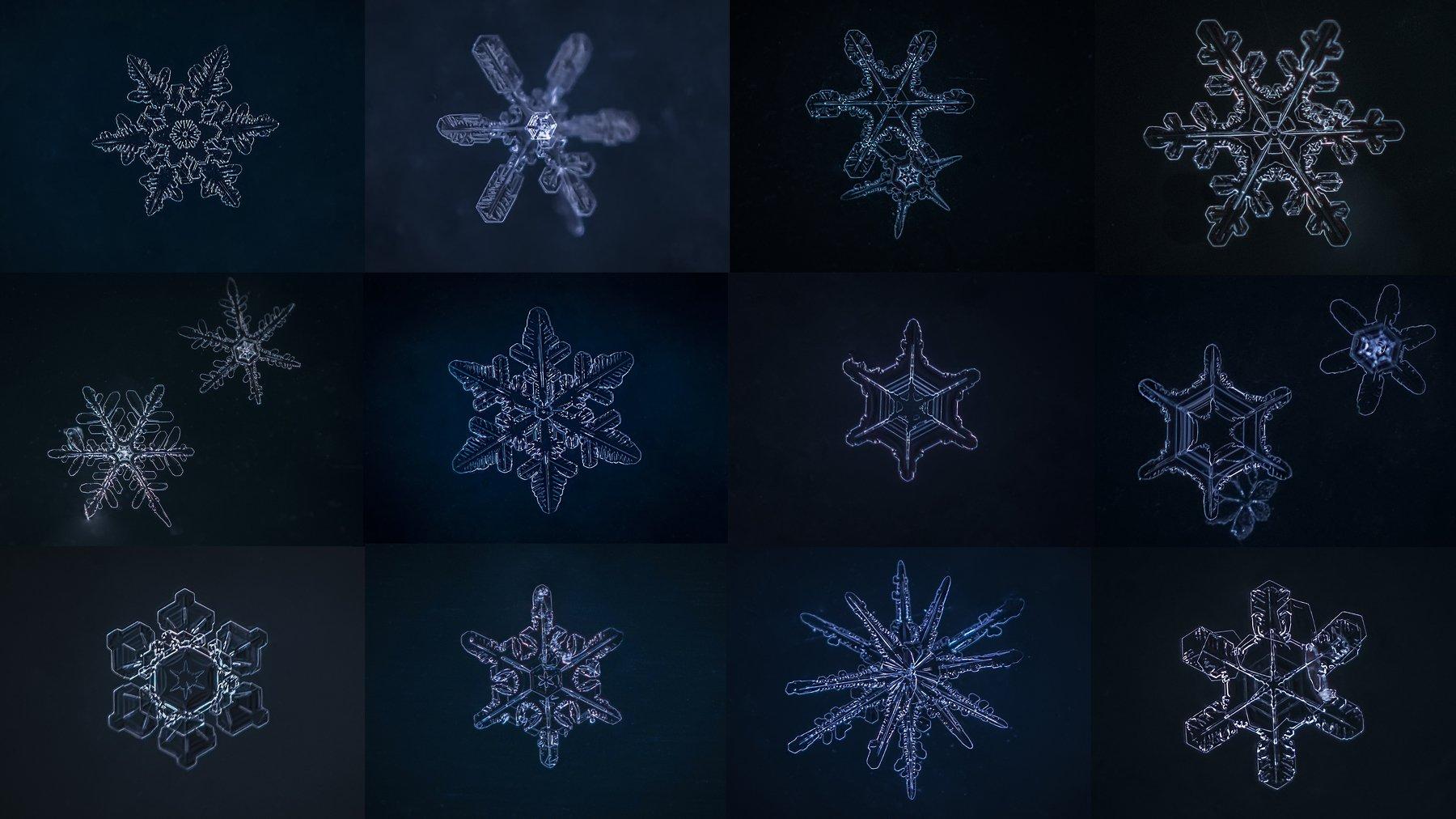 снежинки, Муравская Евгения (соня орешковая)