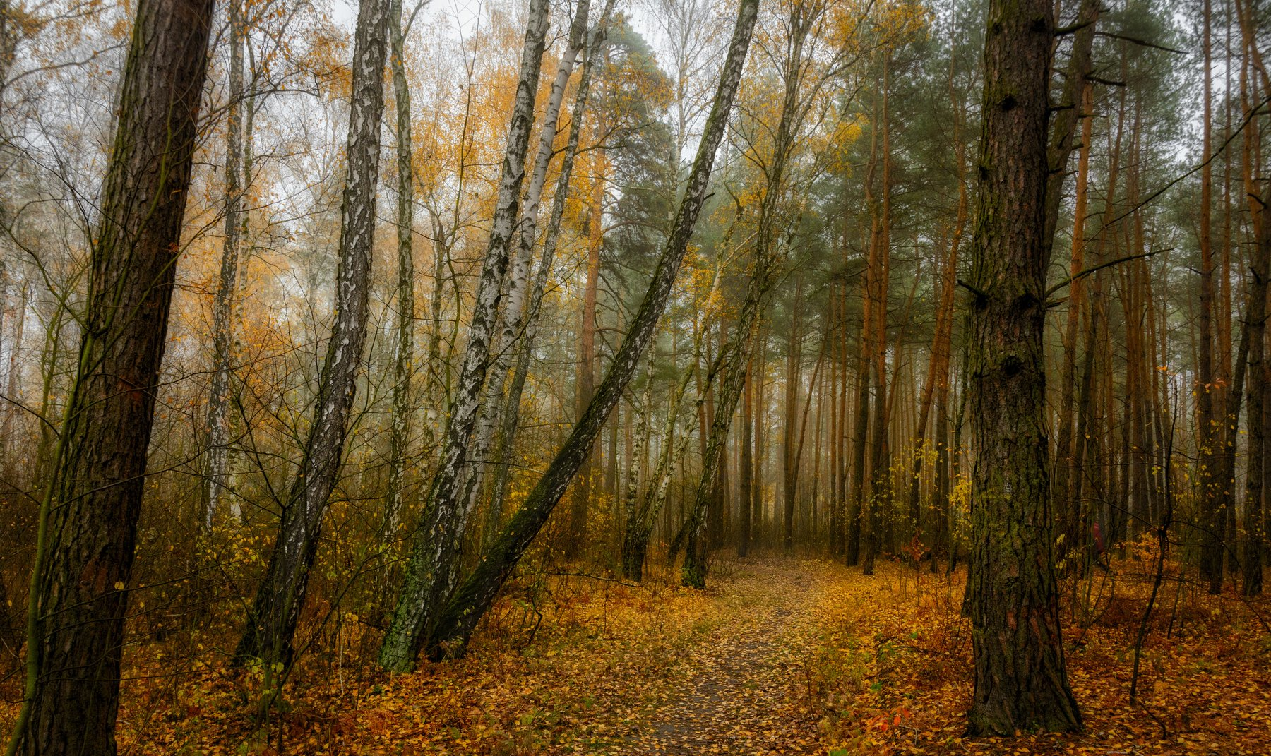 landscape, пейзаж,  деревья,  природа, осенние листья,  осень,   прогулка, осенние краски, дорожка,  опавшие листья, Михаил MSH