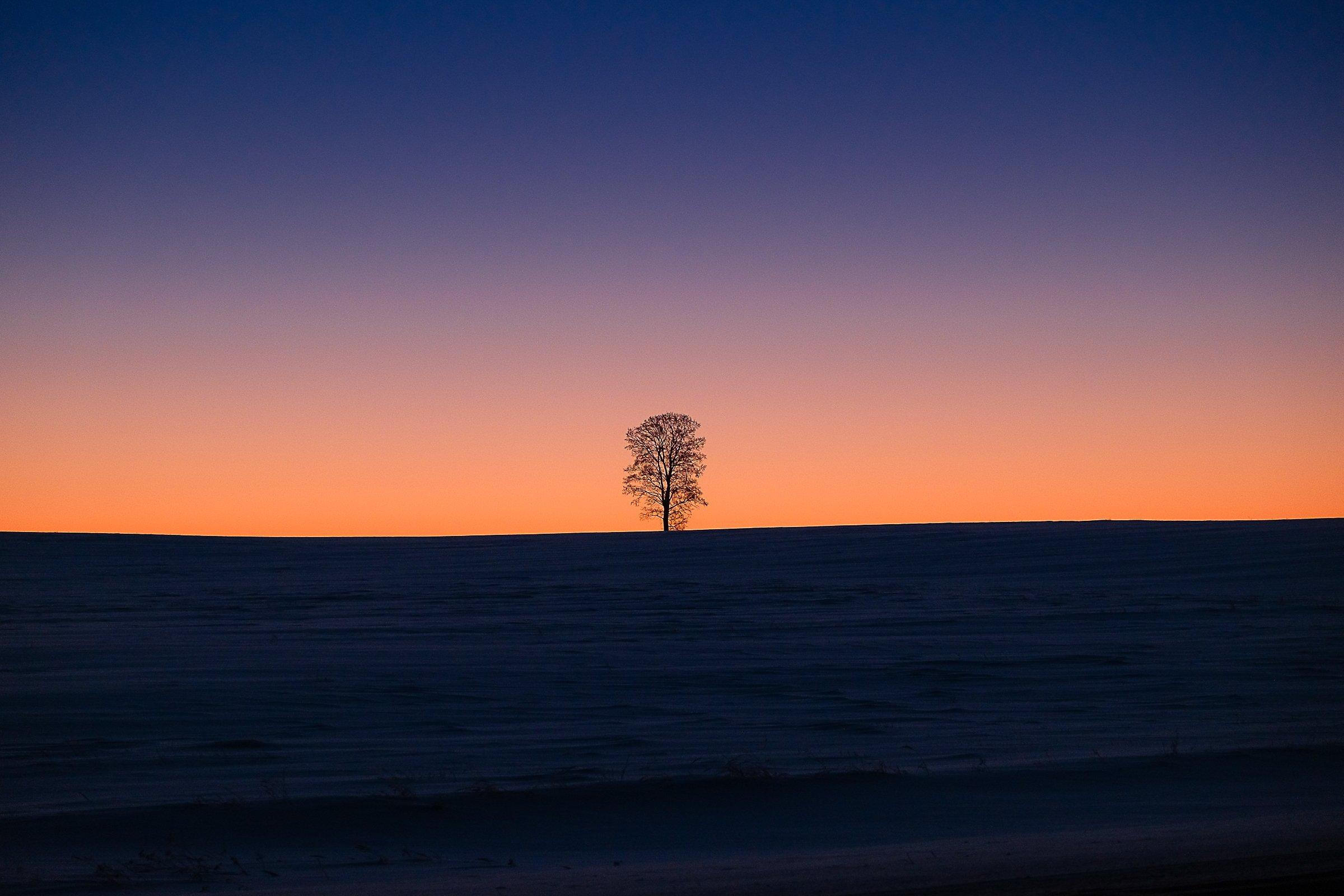 зима. рассвет. одинокое дерево, Максимова Людмила