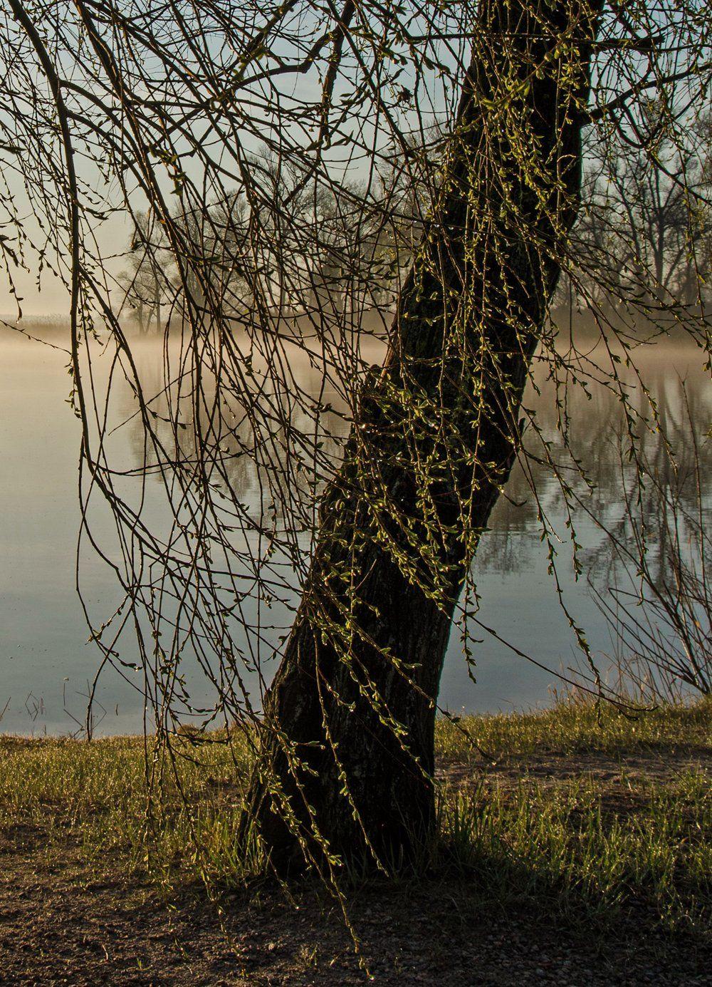 март, восход, рассвет, туман, река, первые листочки, Валерий Наумов