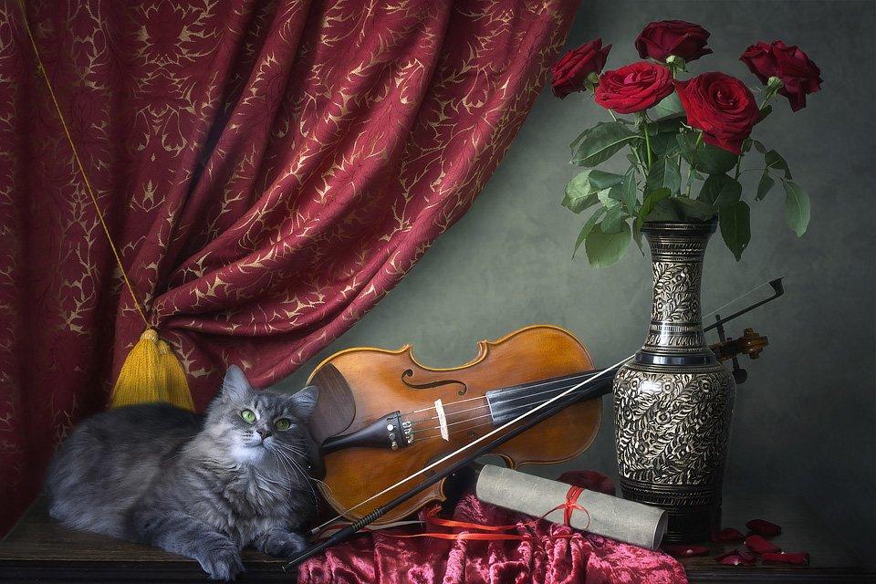 натюрморт, скрипка, букет роз, кошка Масяня, интерьер, Ирина Приходько