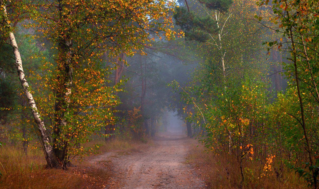 лес, осень, октябрь, тропа, туман, Галанзовская Оксана