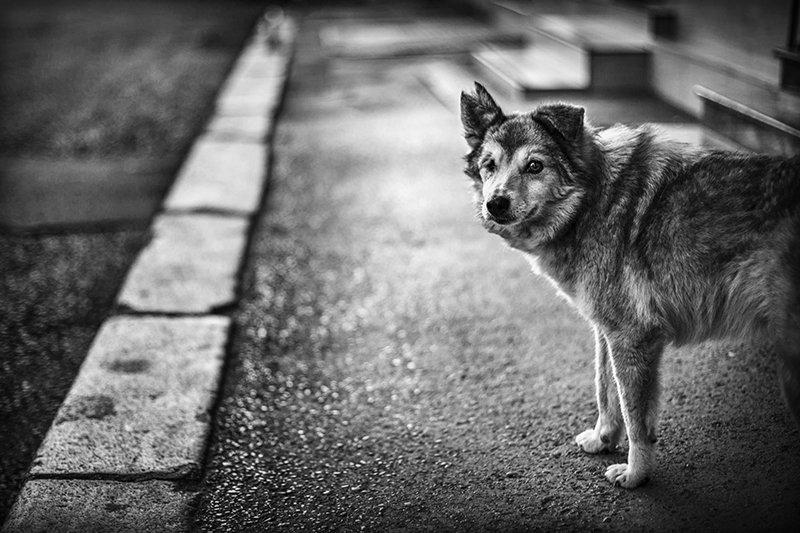 собака, dog, bw, чб, Denis Buchel (Денис Бучель)