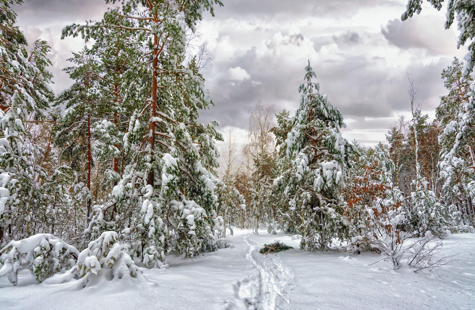 landscape, пейзаж,  лес,  деревья,  природа,   сосны, тропинка, прогулка, снег, зима, мороз,, Михаил MSH