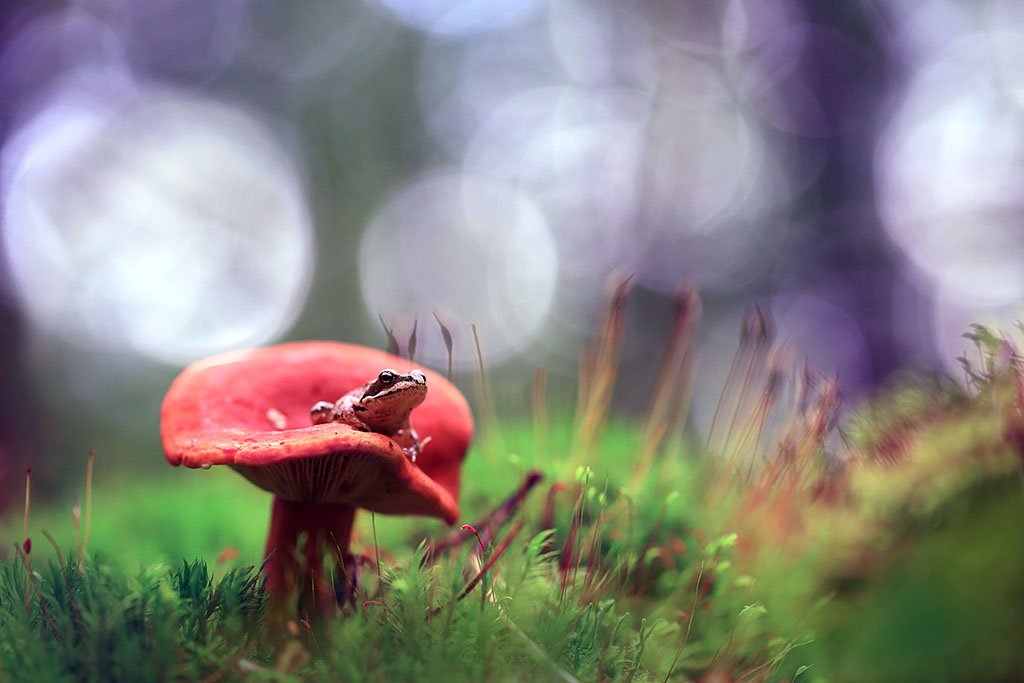 Лес,осень,гриб,лягушка,мох., Виктор Шнайдер