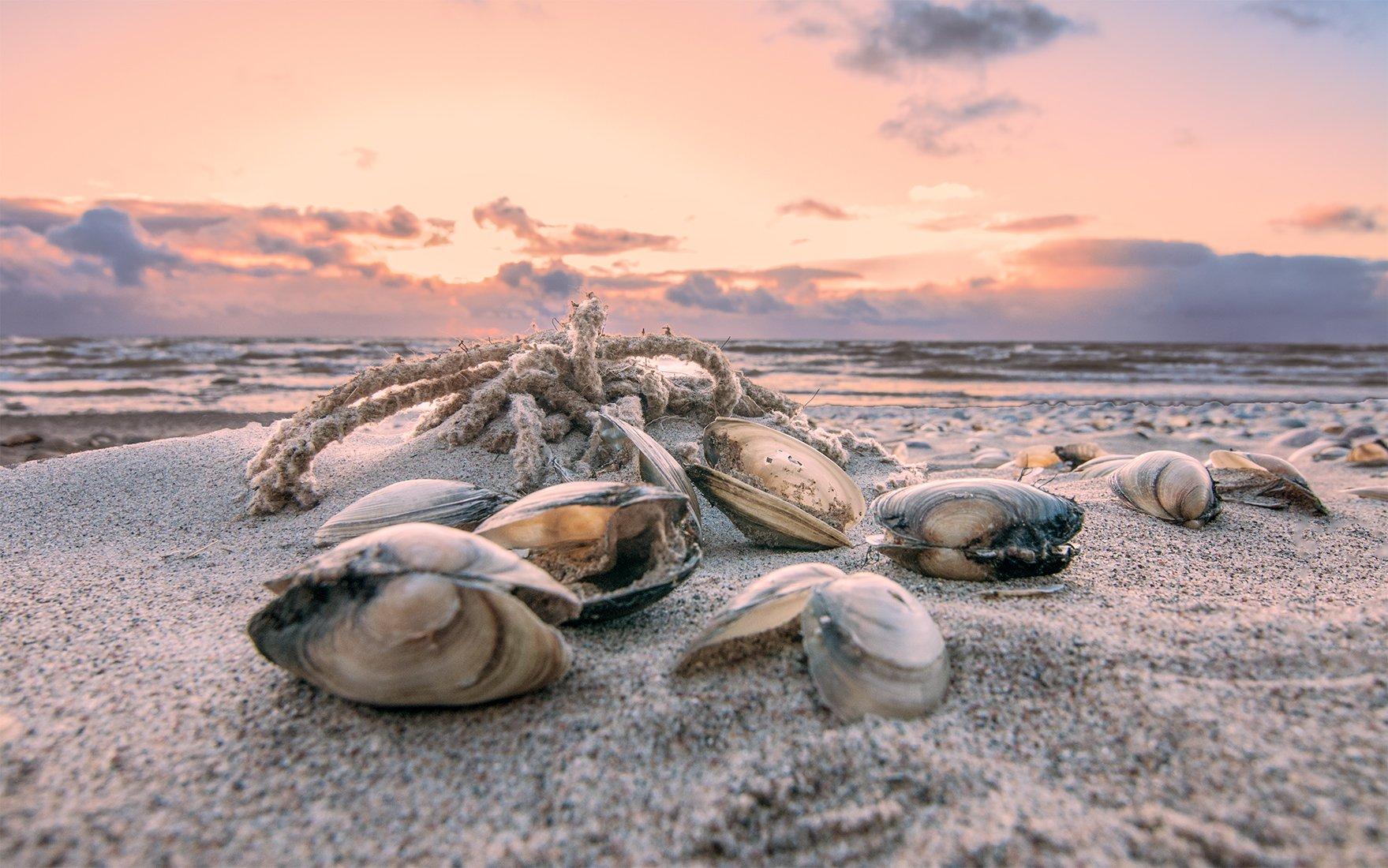 mussel,sea,sky,sunset, Daiva Cirtautė