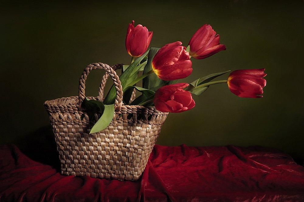 тюльпаны, Алла Шевченко