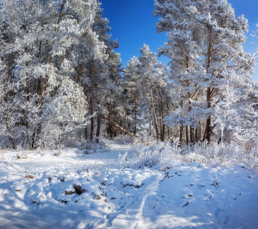 январь, лес, полдень,, Сергей Шабуневич