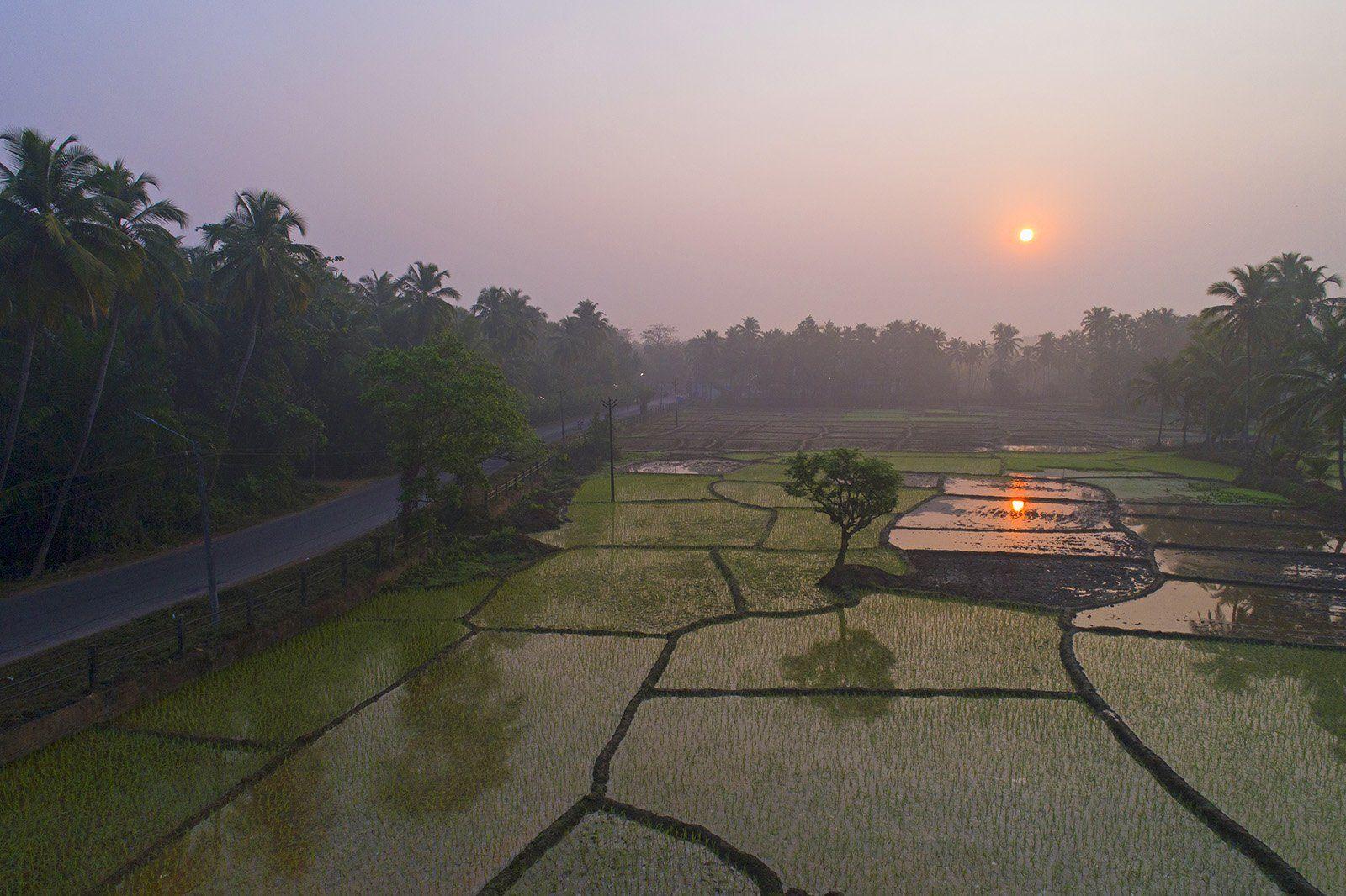 Индия, Гоа, рисовые поля, восход, дрон, aerial, Борис Резванцев