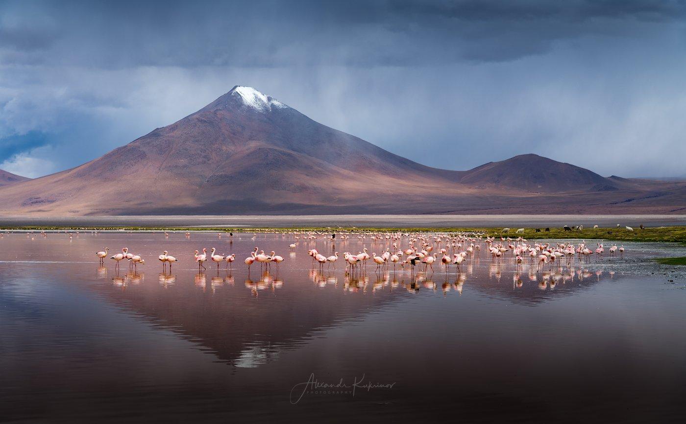 laguna colorado, боливия, фламинго, Александр Кукринов