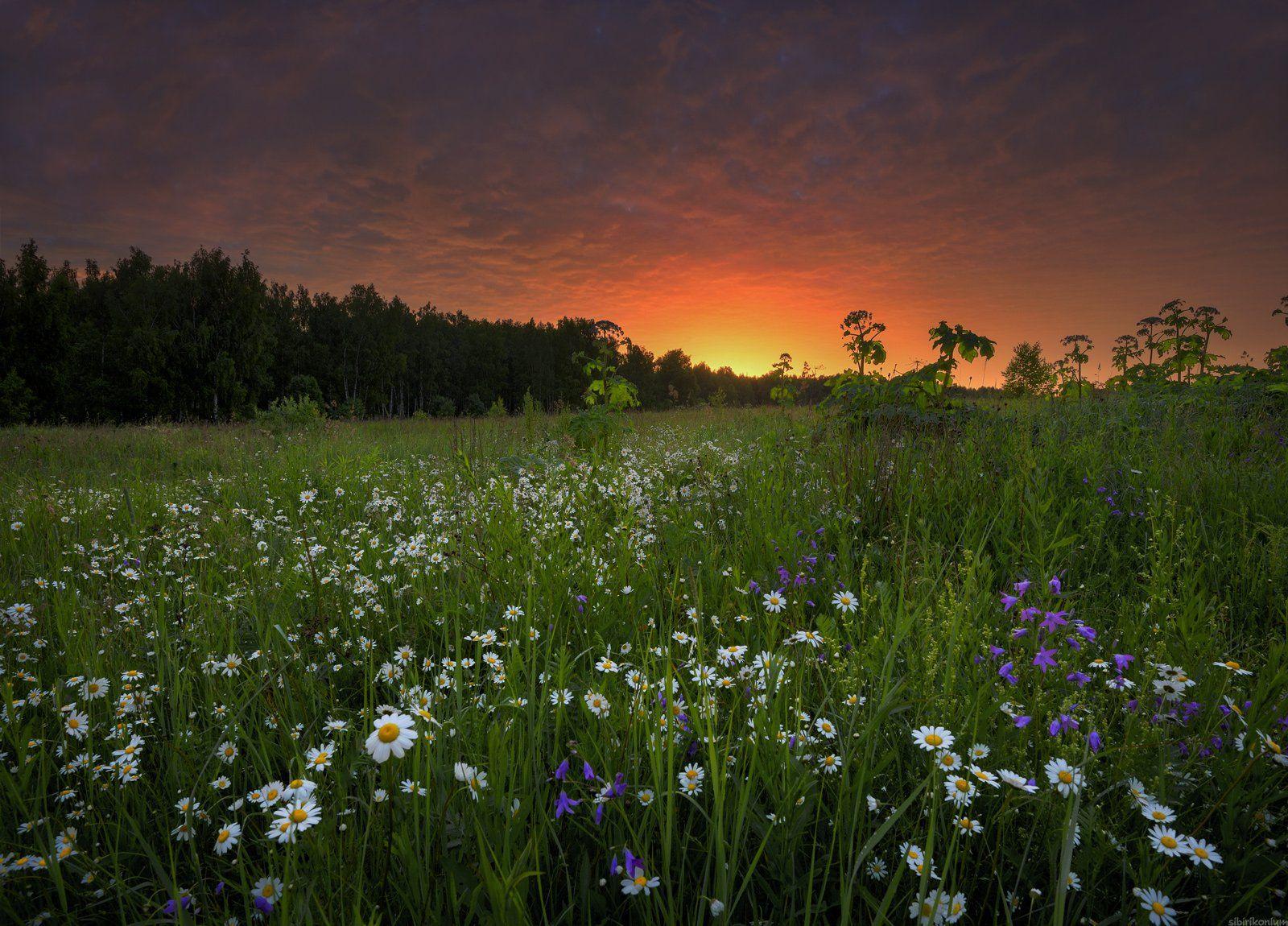 #пейзаж #лето #утро #подмосковье #красиво, Морозов Юрий