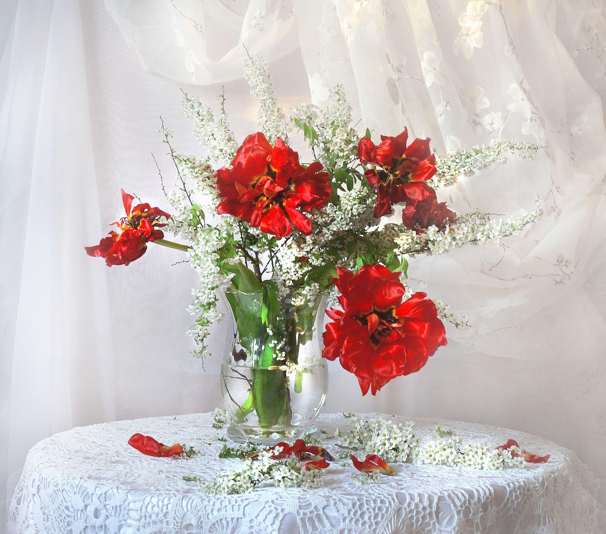 still life, натюрморт, весна, май, спирея, тюльпаны, фото натюрморт, цветы, Колова Валентина