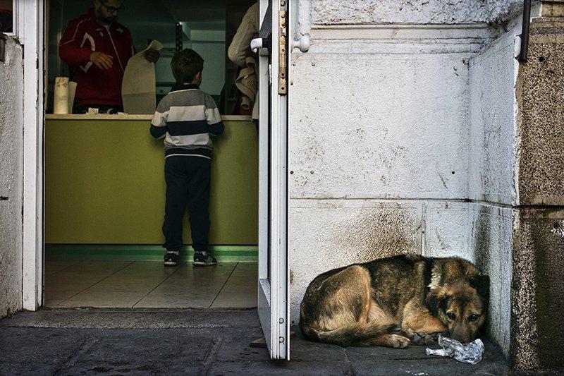 dog, собака, Denis Buchel (Денис Бучель)