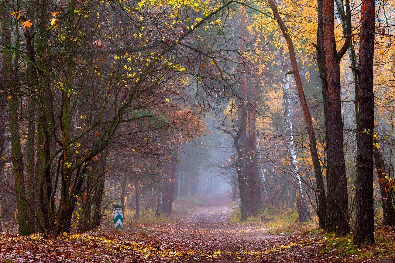 лес, осень, ноябрь, тропа, туман, Галанзовская Оксана