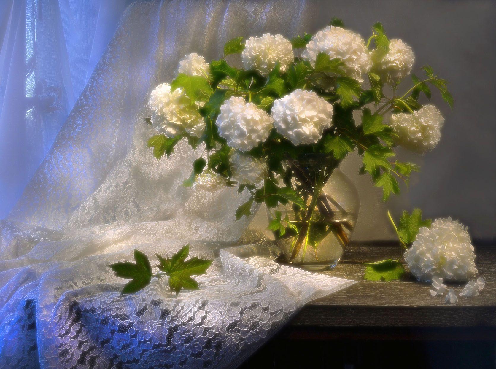 still life, натюрморт, белая ночь, июнь, калина, летний вечер, лето, лунный свет, натюрморт, цветы, Колова Валентина